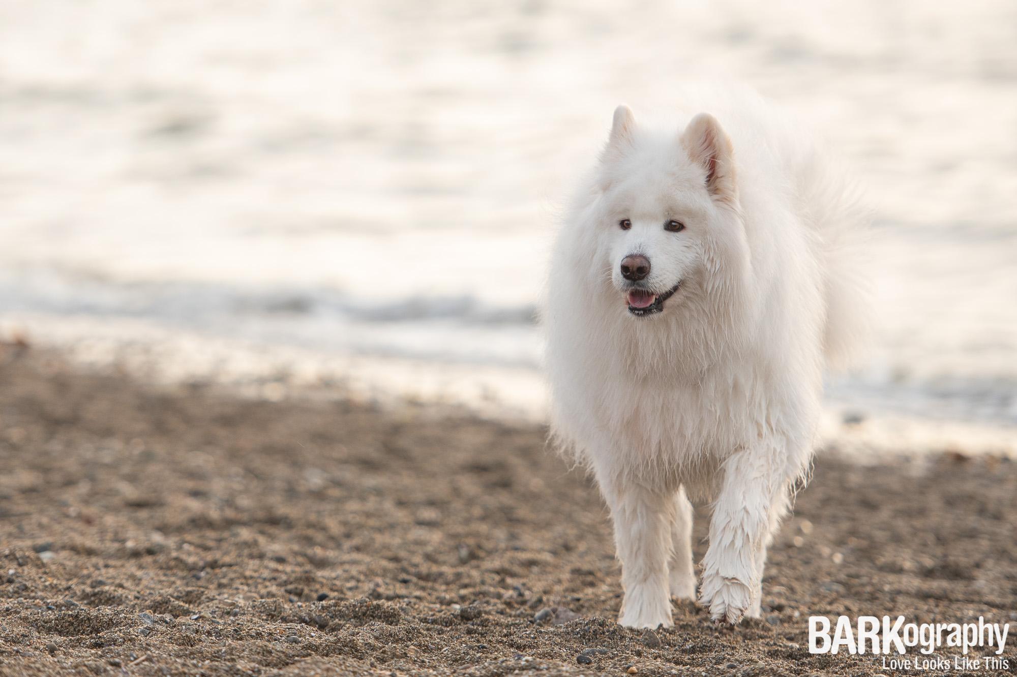 Kitsilano Beach Dog Photographer.JPG