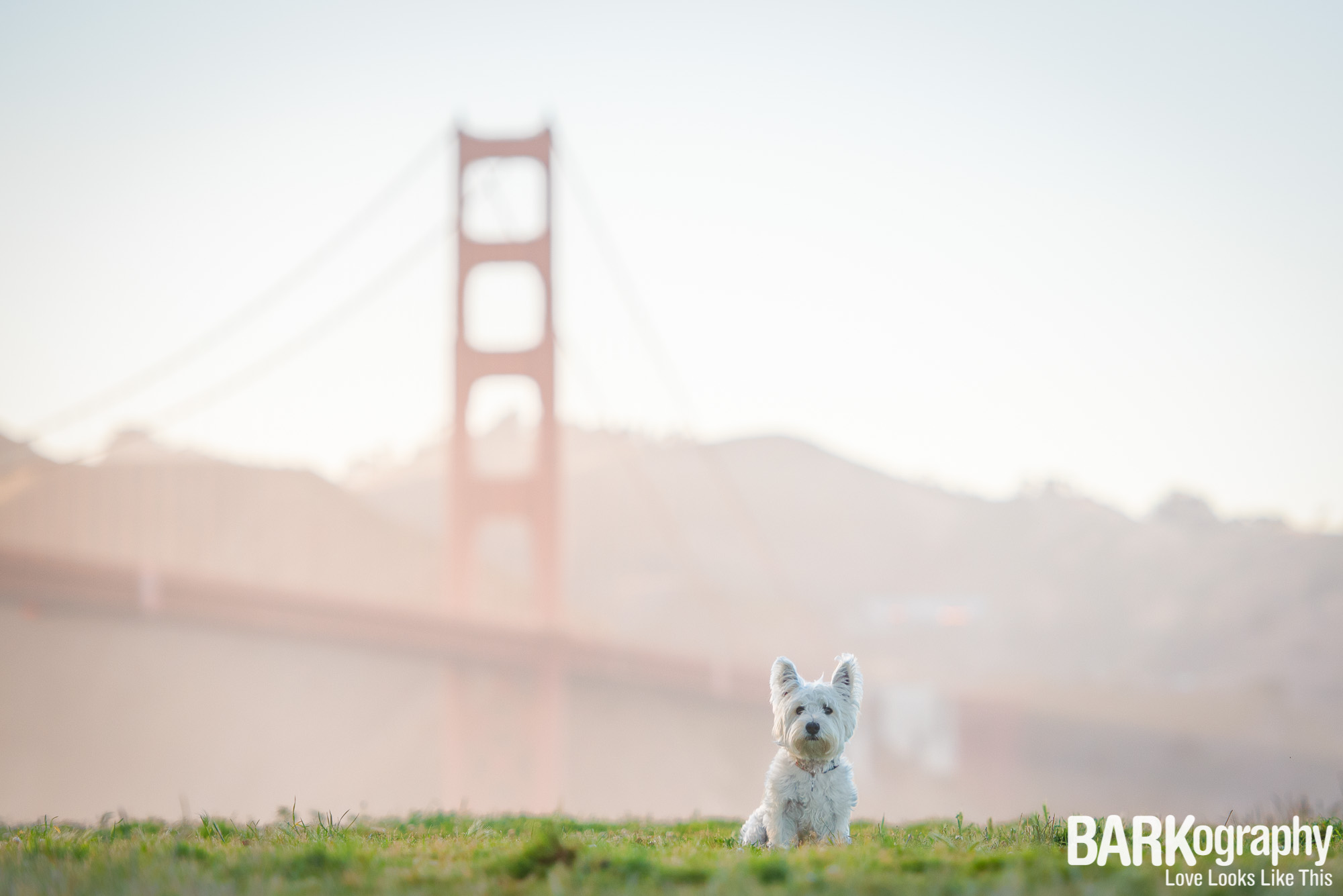 San Francisco dog photographer.JPG