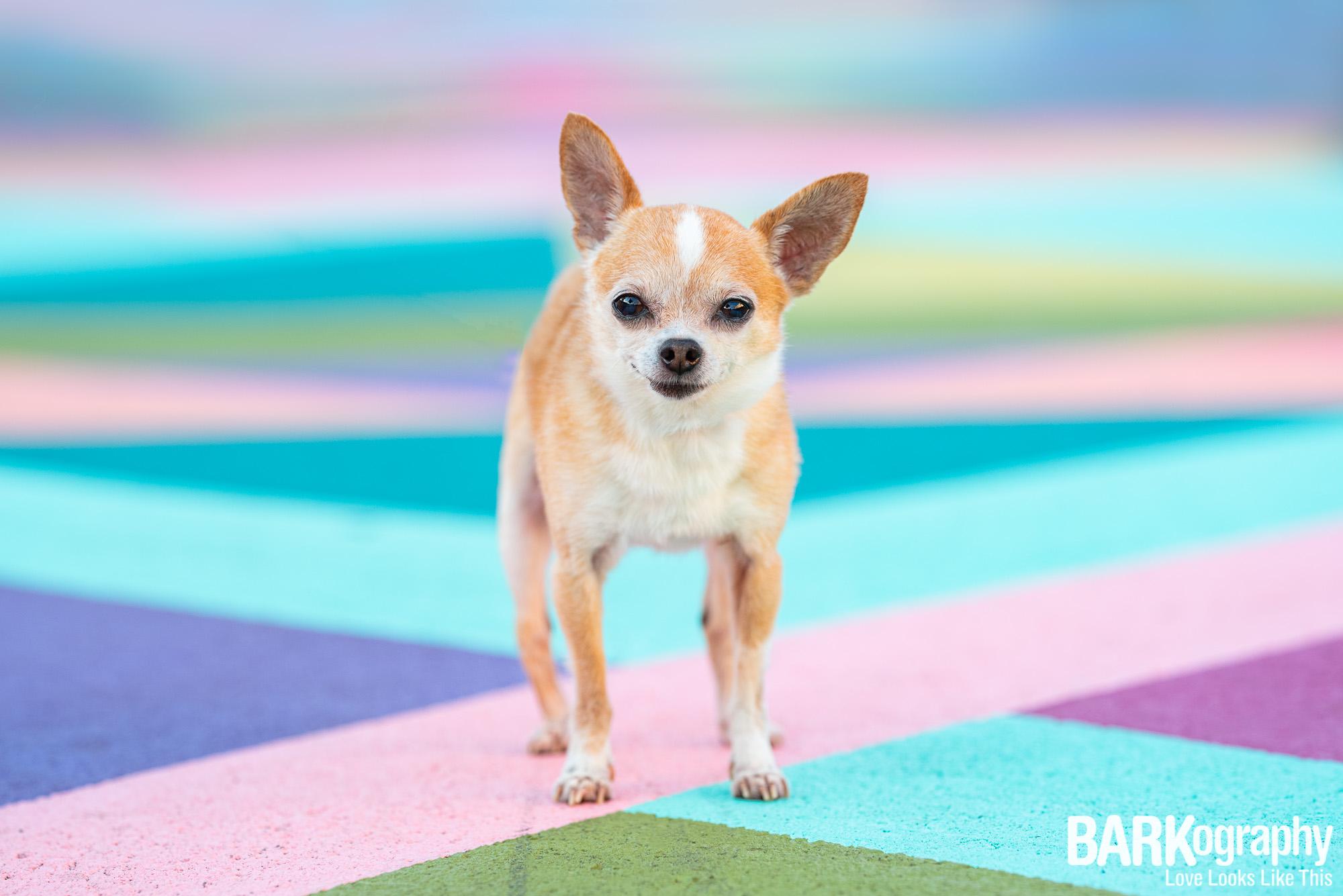 South End dog photographer.JPG