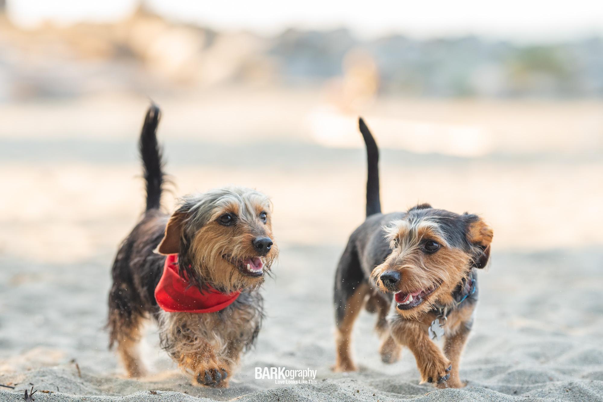 Kits Beach Two Dog Photo.JPG