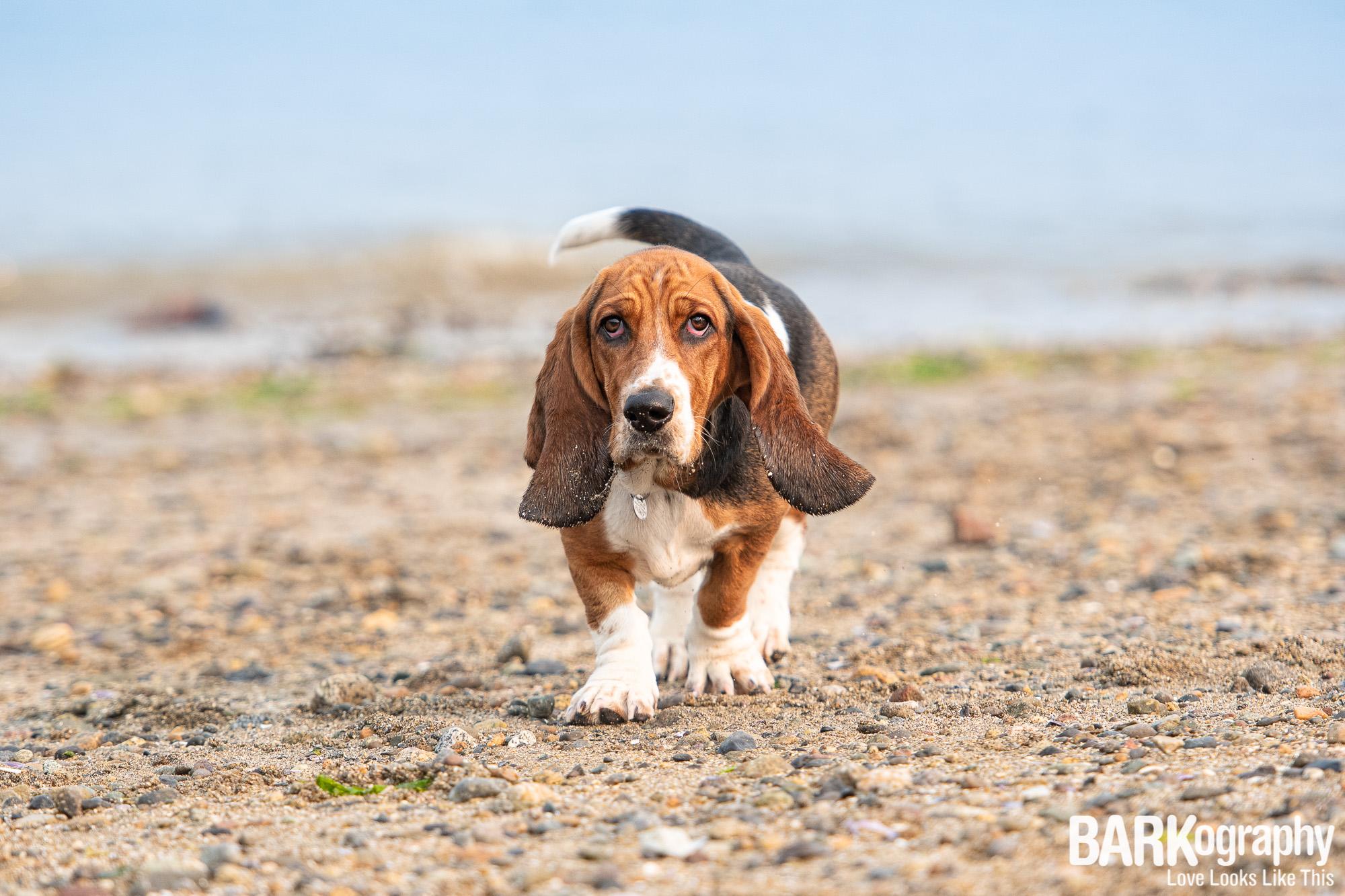 Kitsilano Beach Dog Photo.JPG