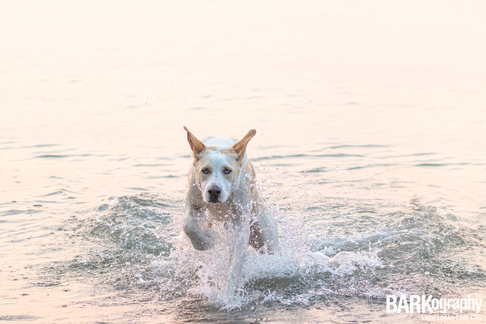 Kitsilano Beach Dog Photography.JPG