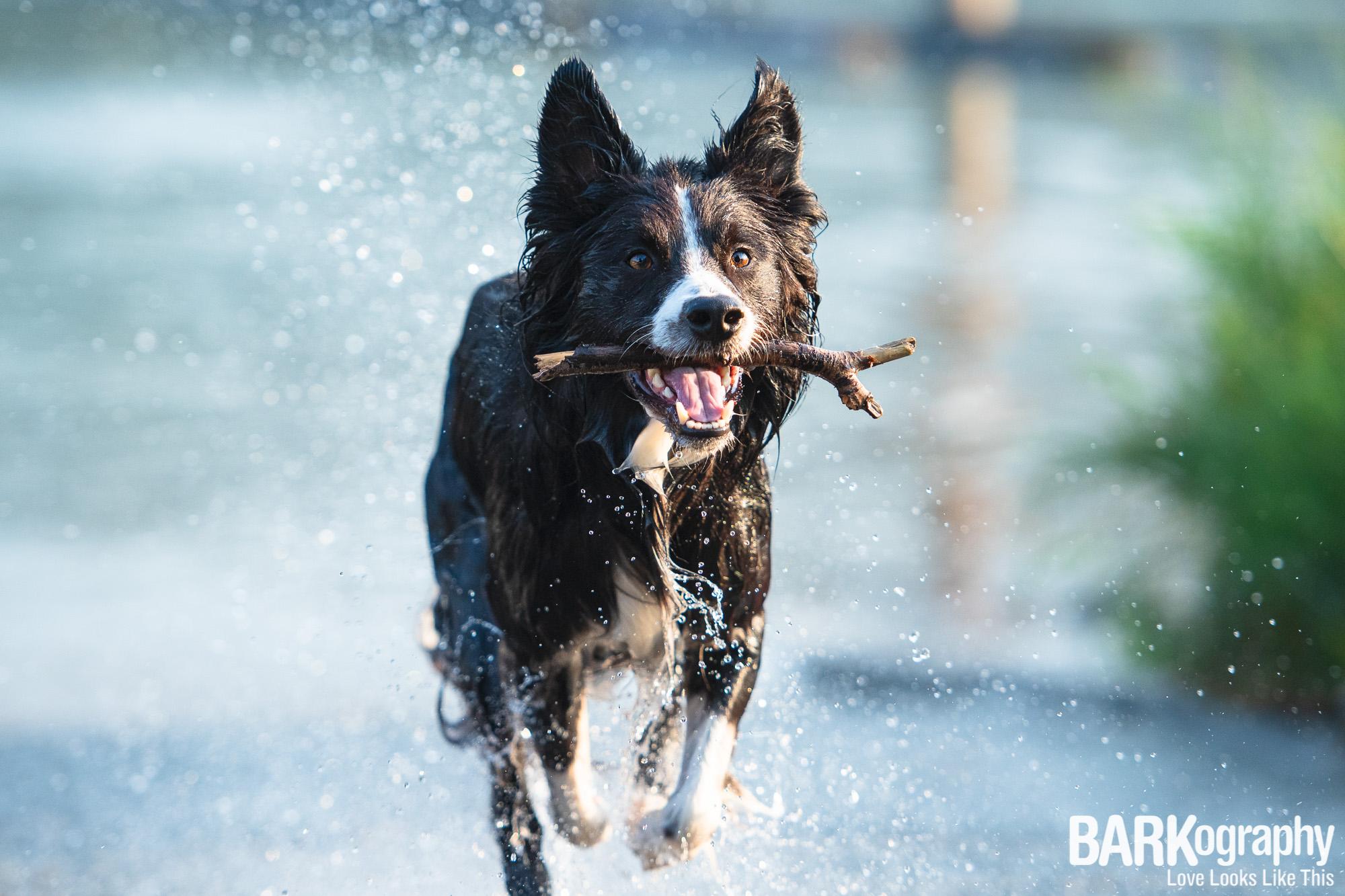 Lake Norman action dog photography.JPG