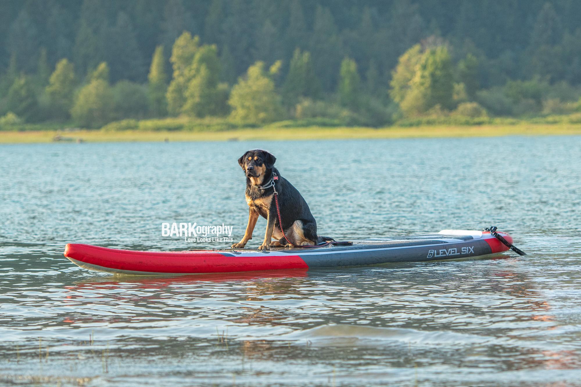 Paddle boarding SUP Vancouver Dog.JPG