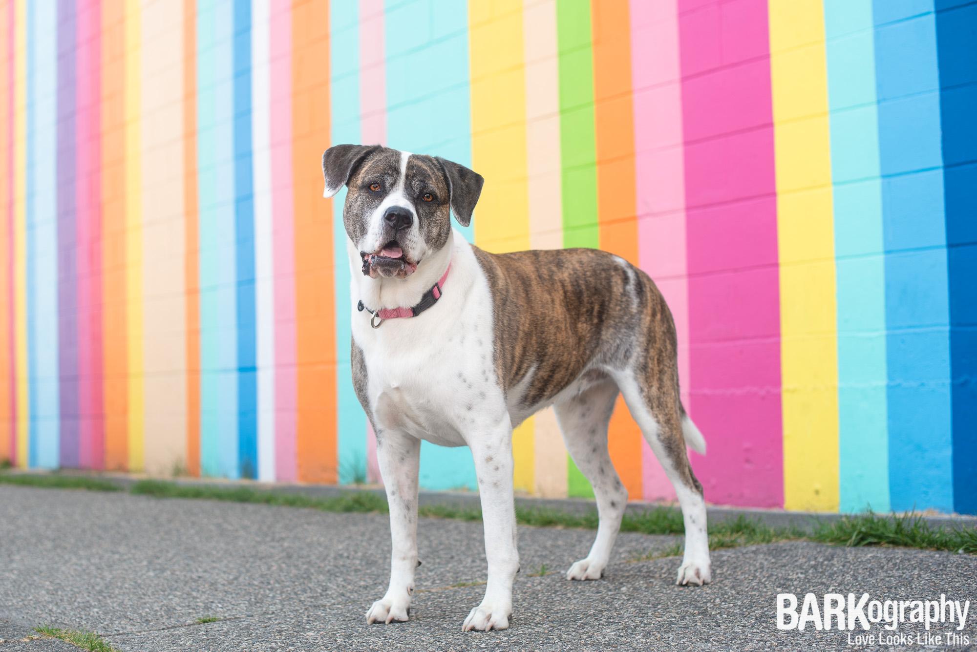 Vancouver Mural Dog Photographer.JPG