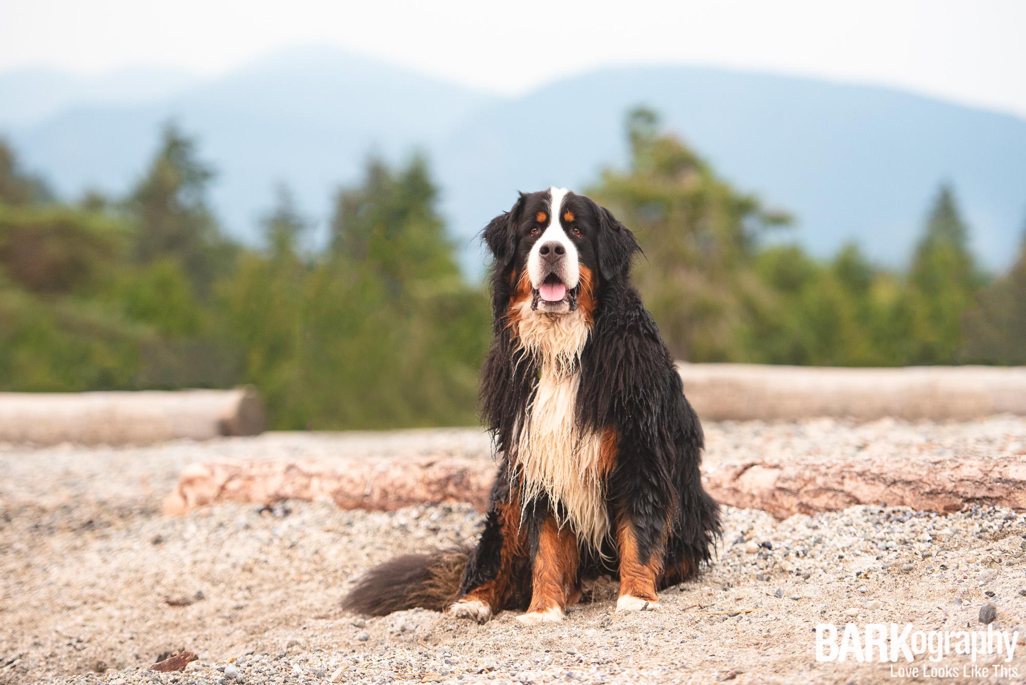 West Vancouver Dog Photo.JPG