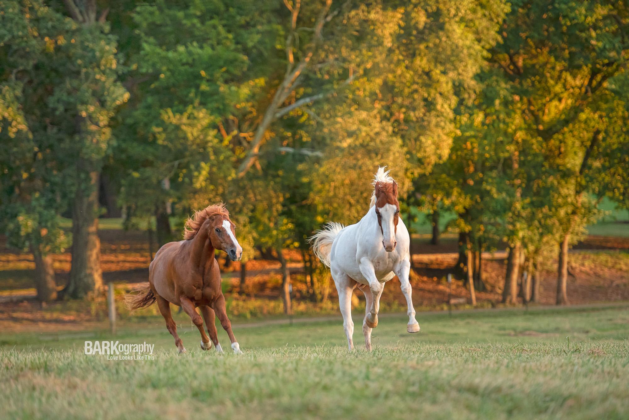 horse photographer.JPG