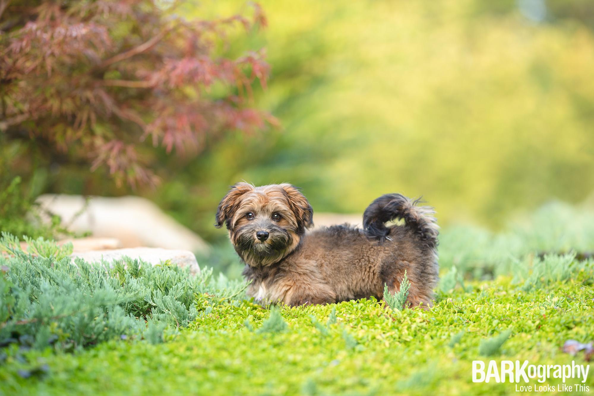 Charlotte puppy photographer.JPG