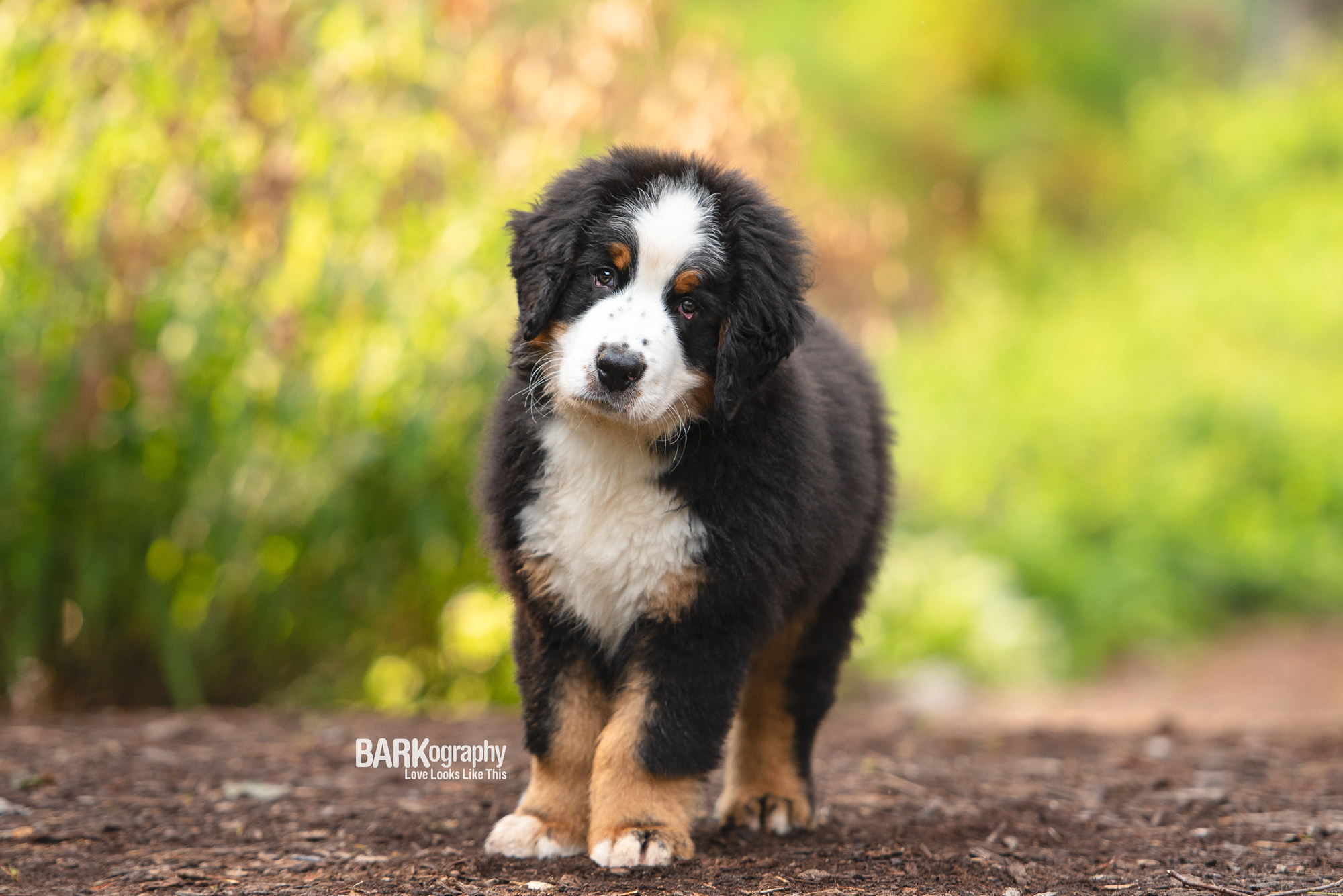 best dog photographer Charlotte NC.JPG