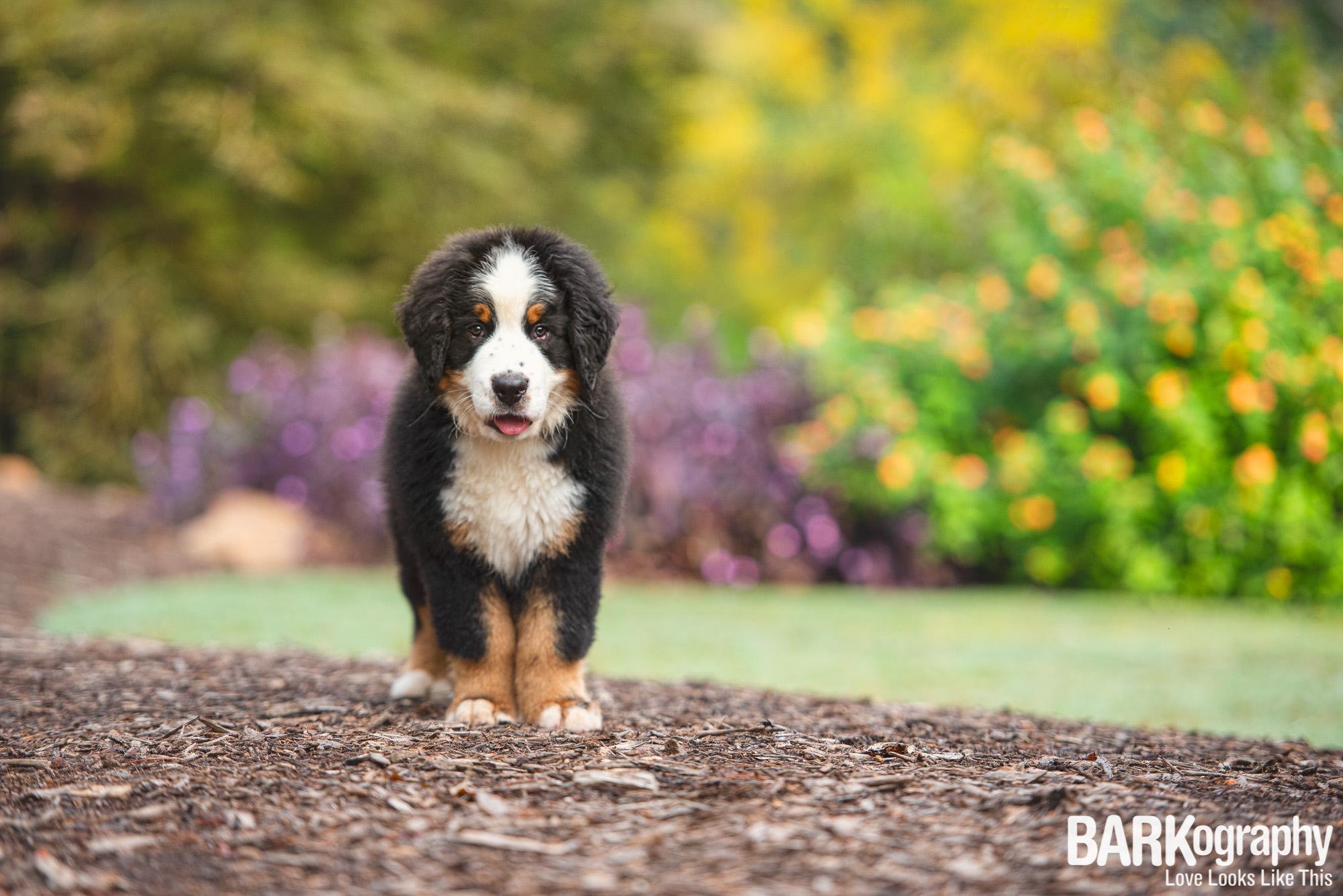favorite dog photographer Charlotte NC.JPG