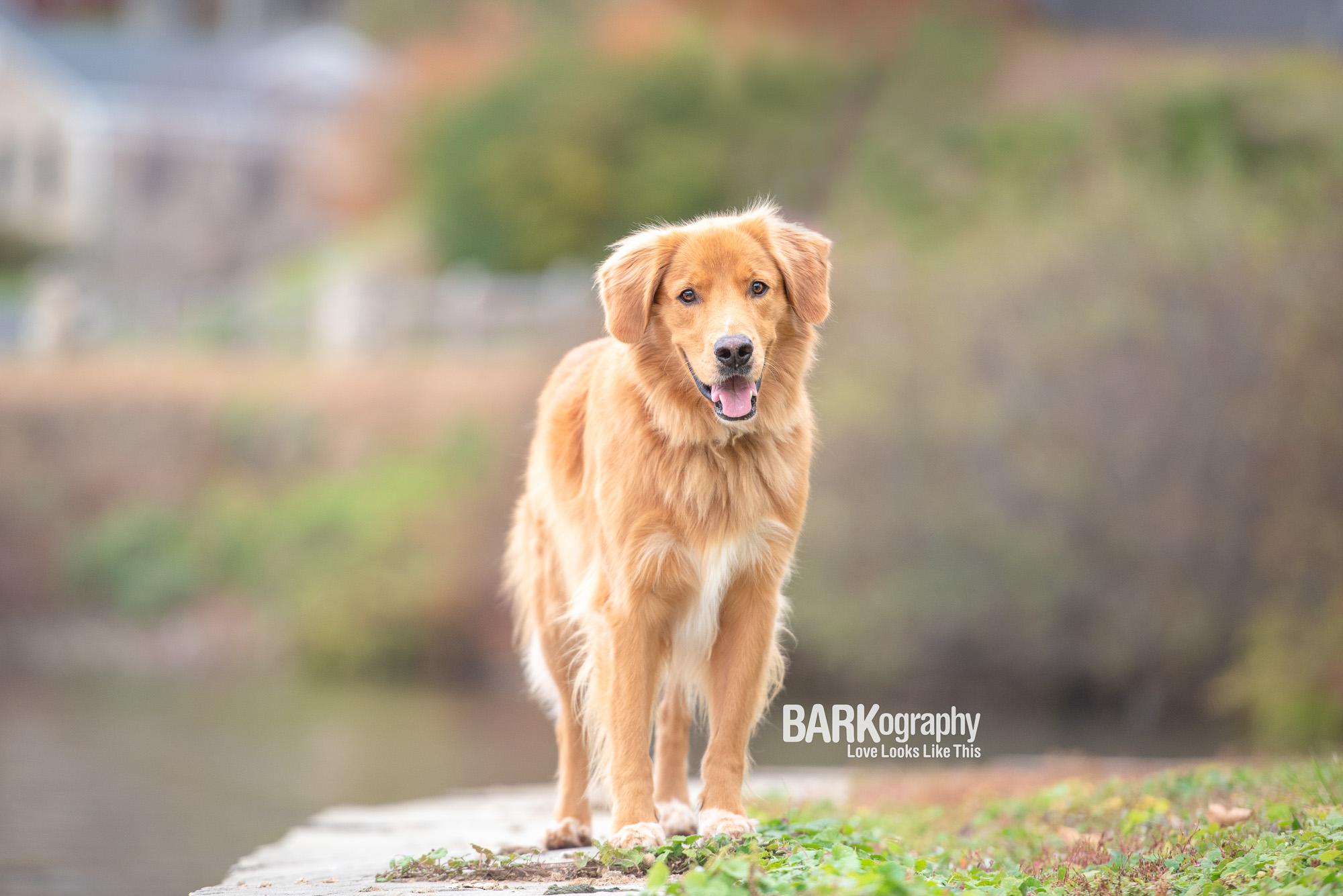 Dog Photographer Asheville NC.JPG