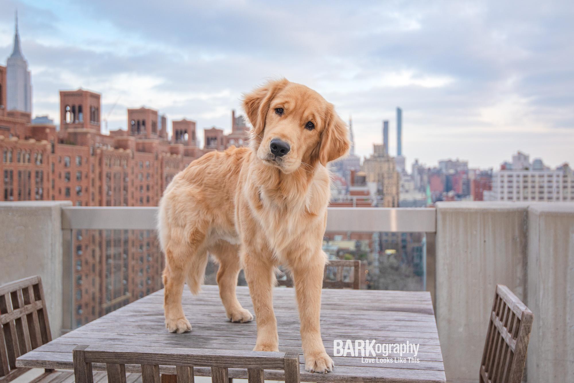 NYC Dog Photographer.JPG