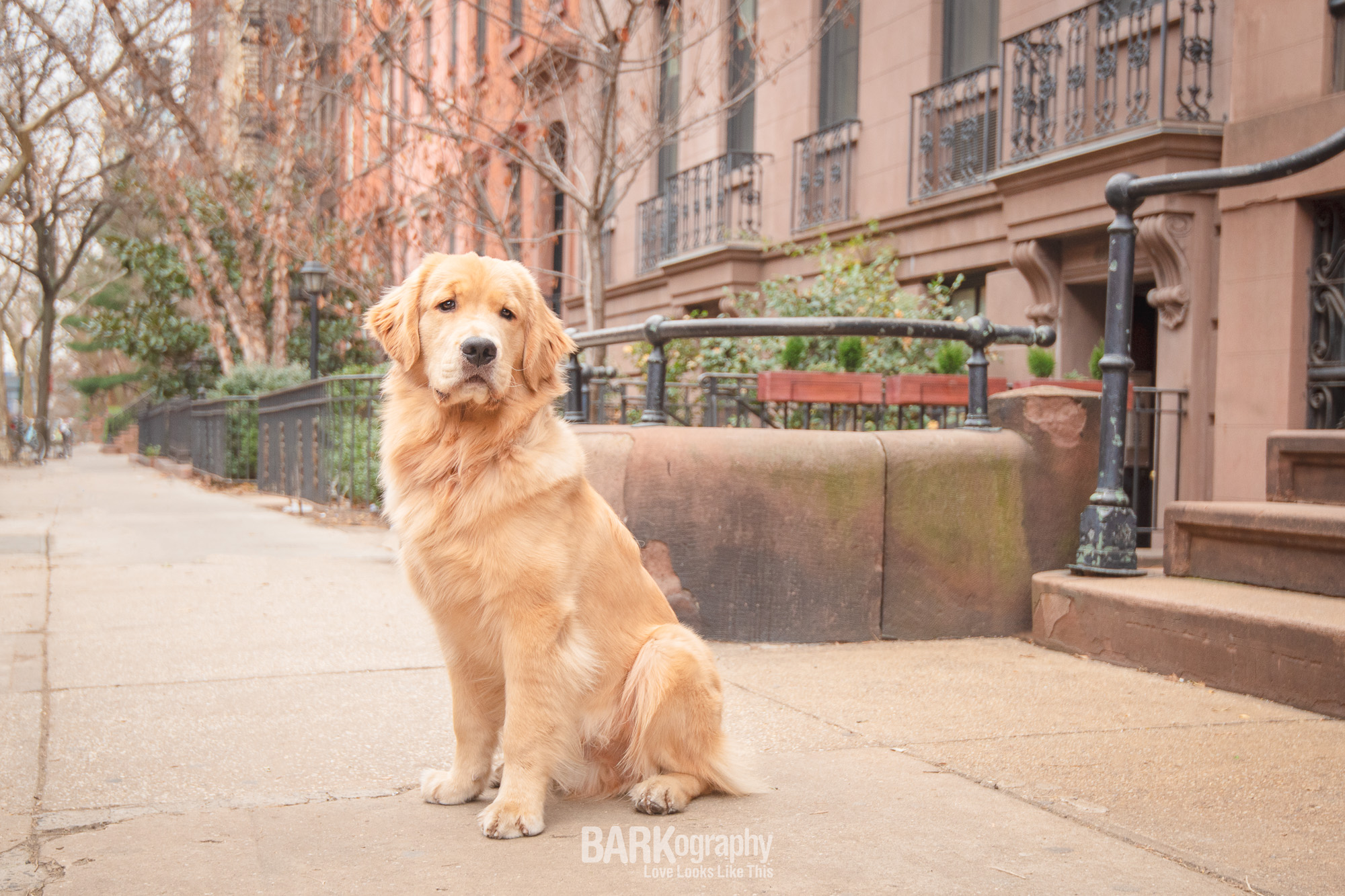 NYC Dog Photography.JPG