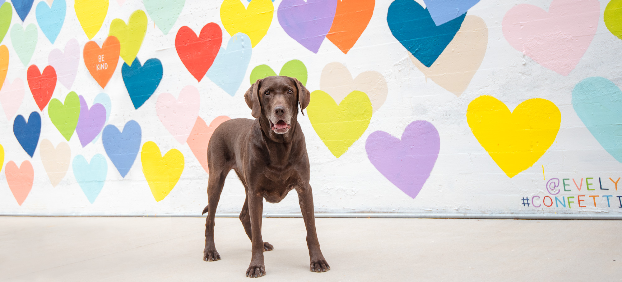 dog photography in Charlotte NC with murals.JPG