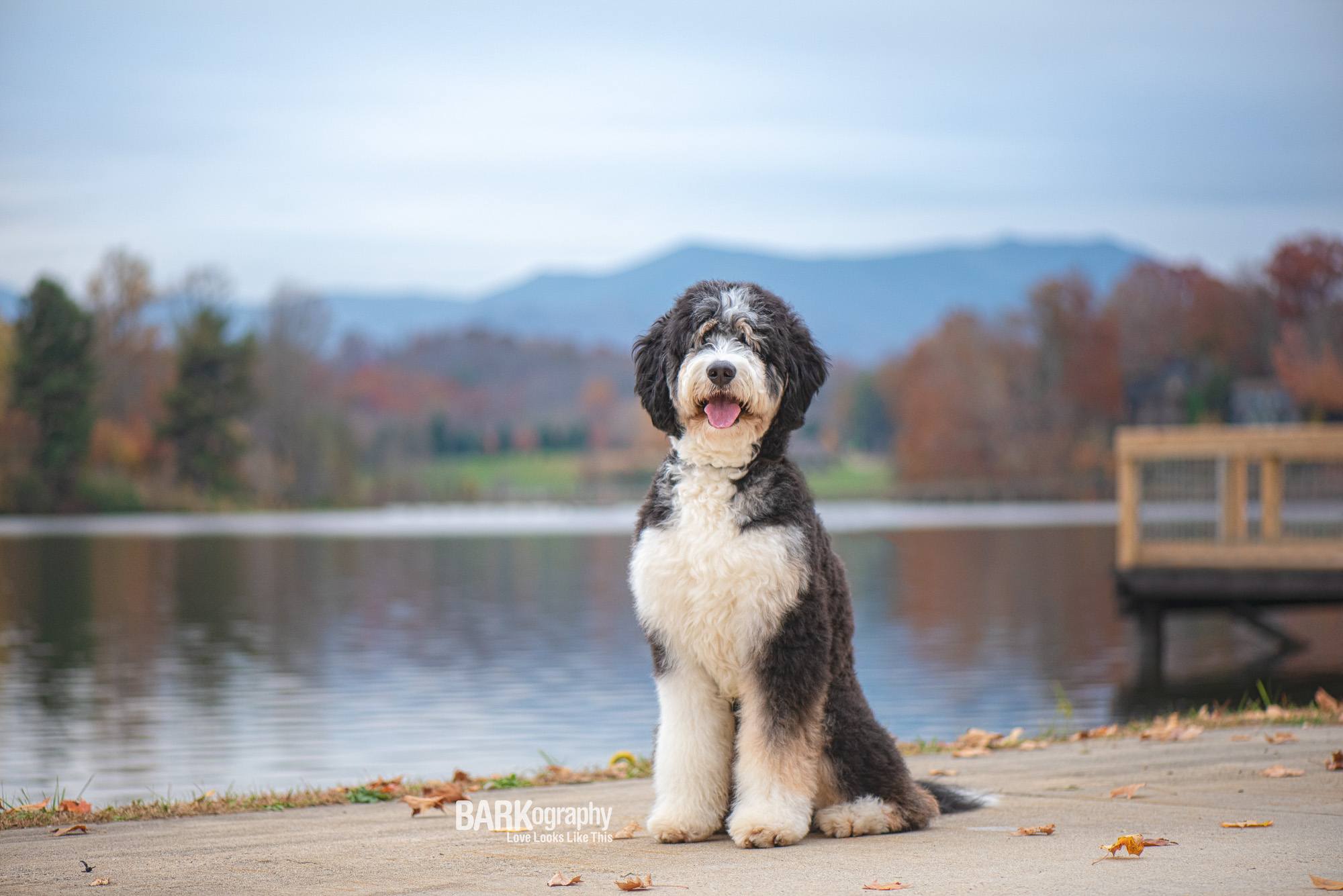 Dog Photography Lake Junaluska NC.JPG