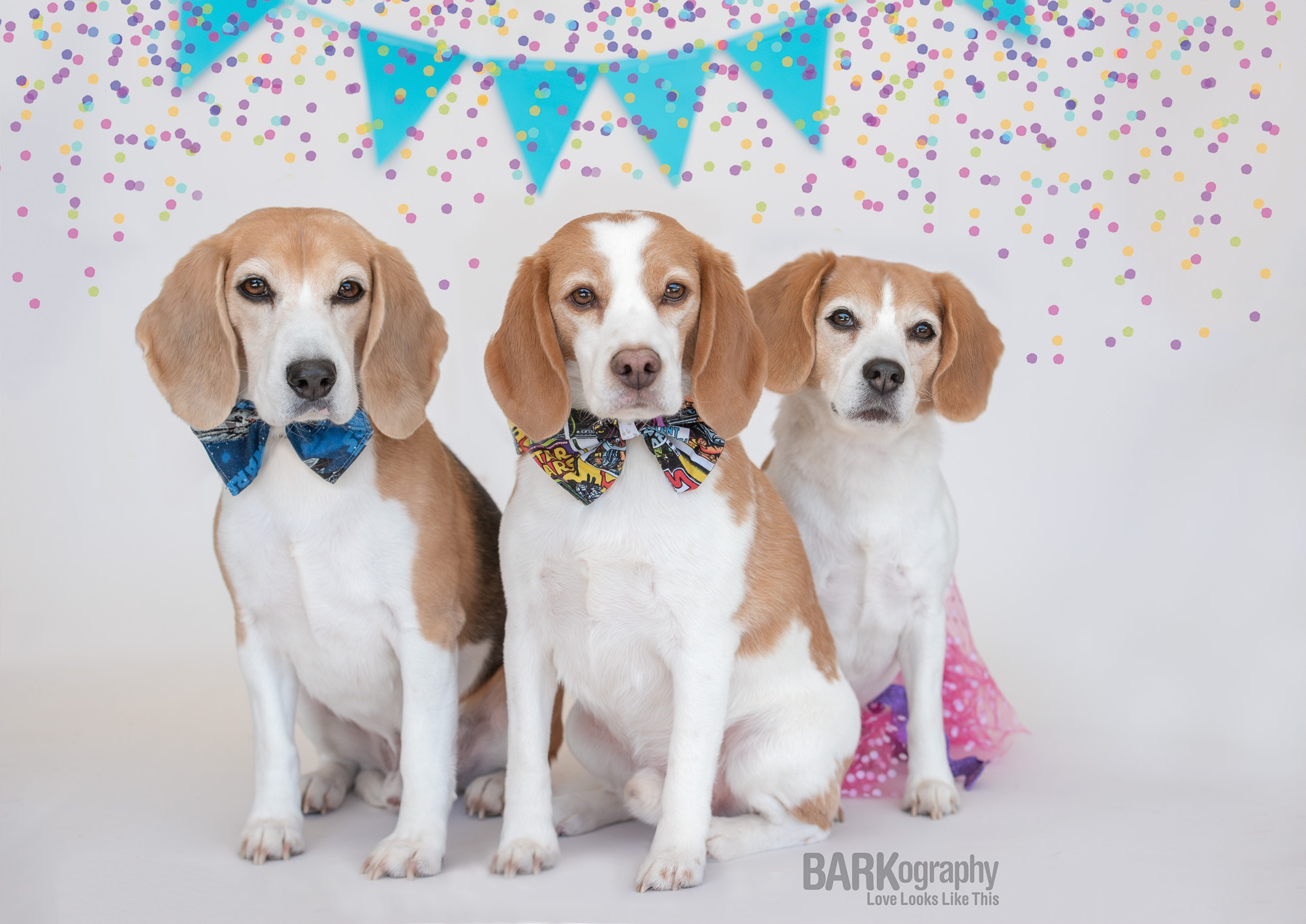 beagle birthday party.JPG