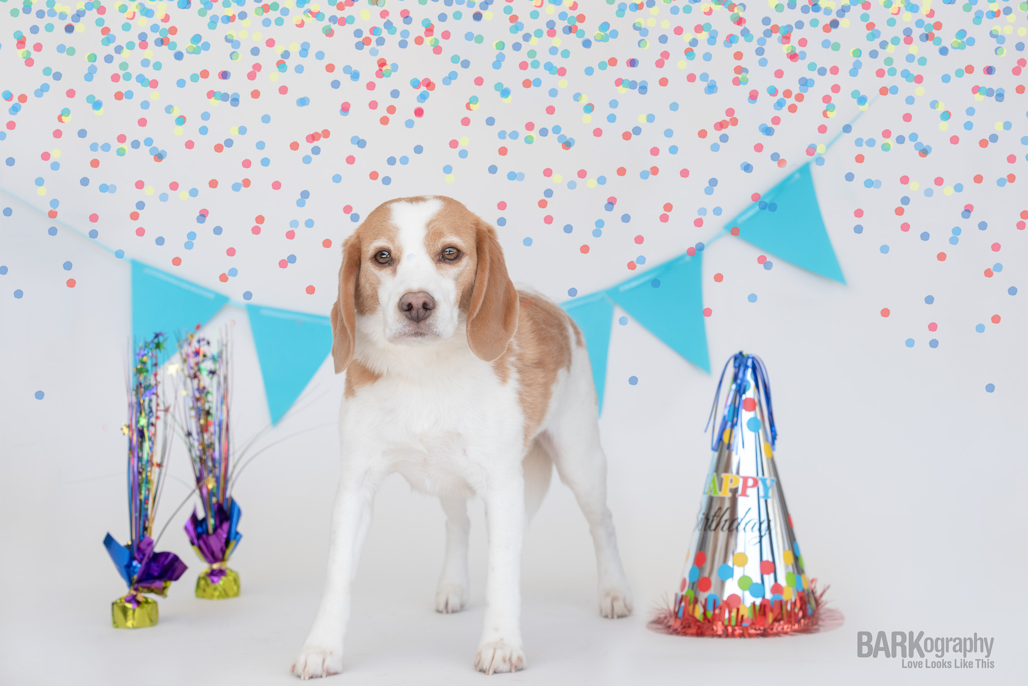 boy dog birthday party.JPG