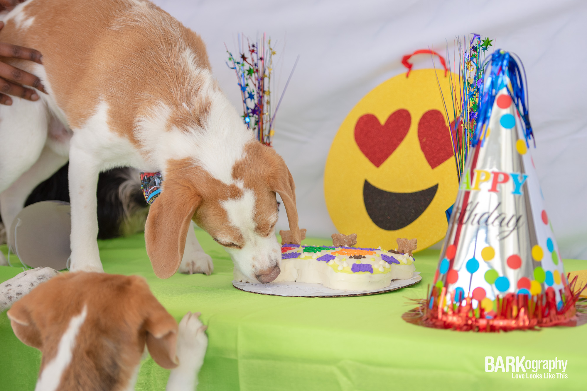 dog birthday cake is good.JPG