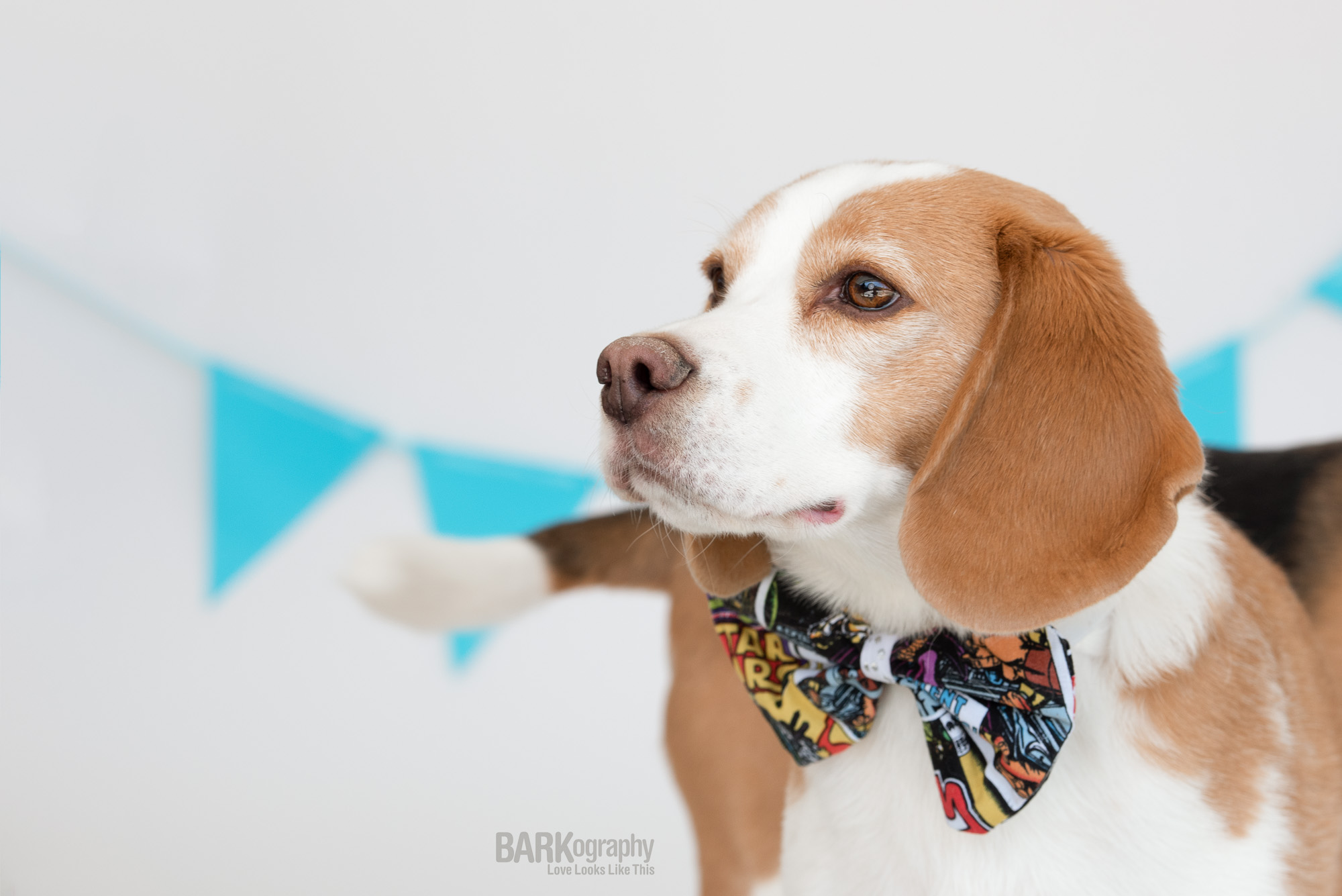 dog in bowtie birthday party decorations.JPG