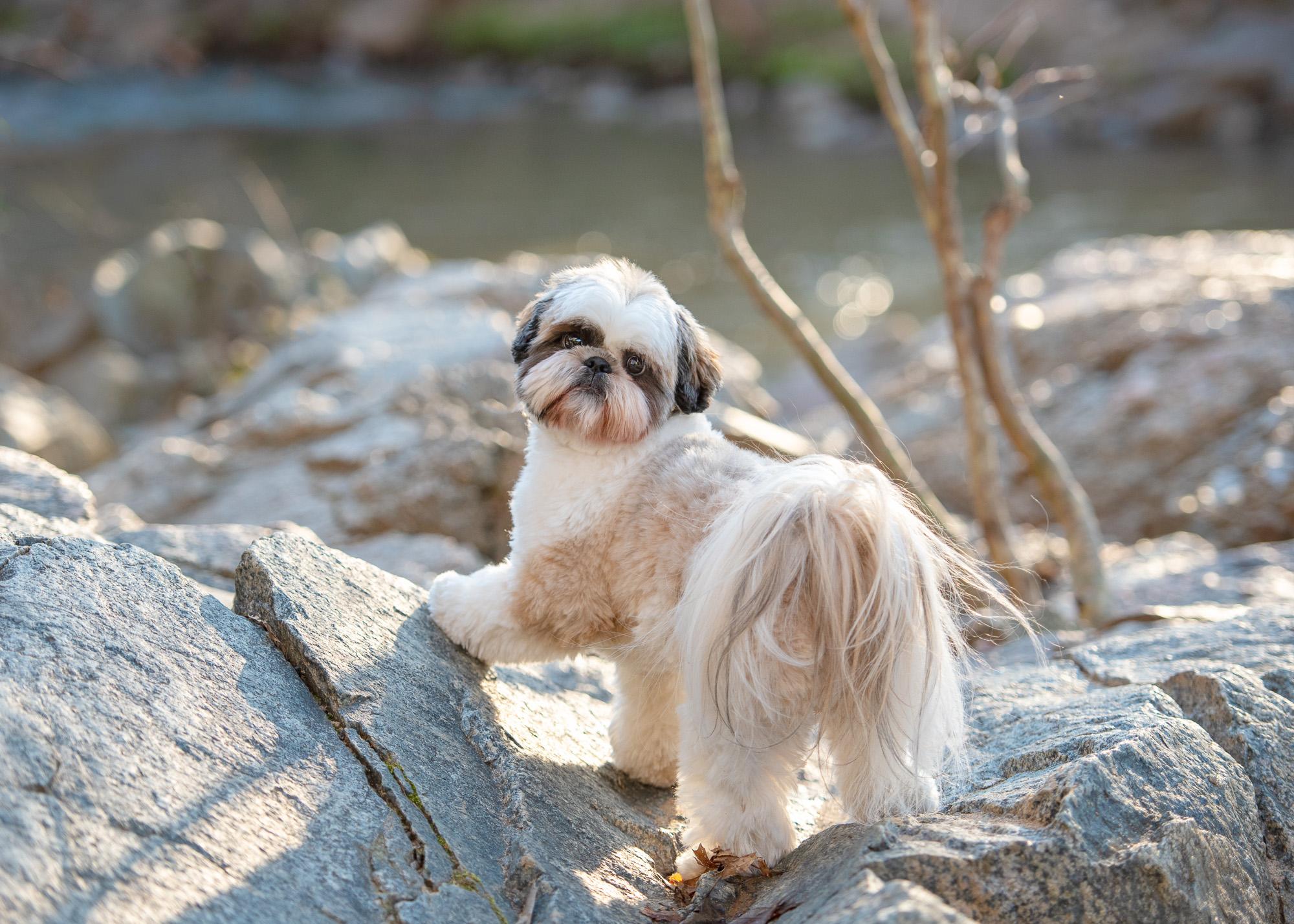 28203 dog photo