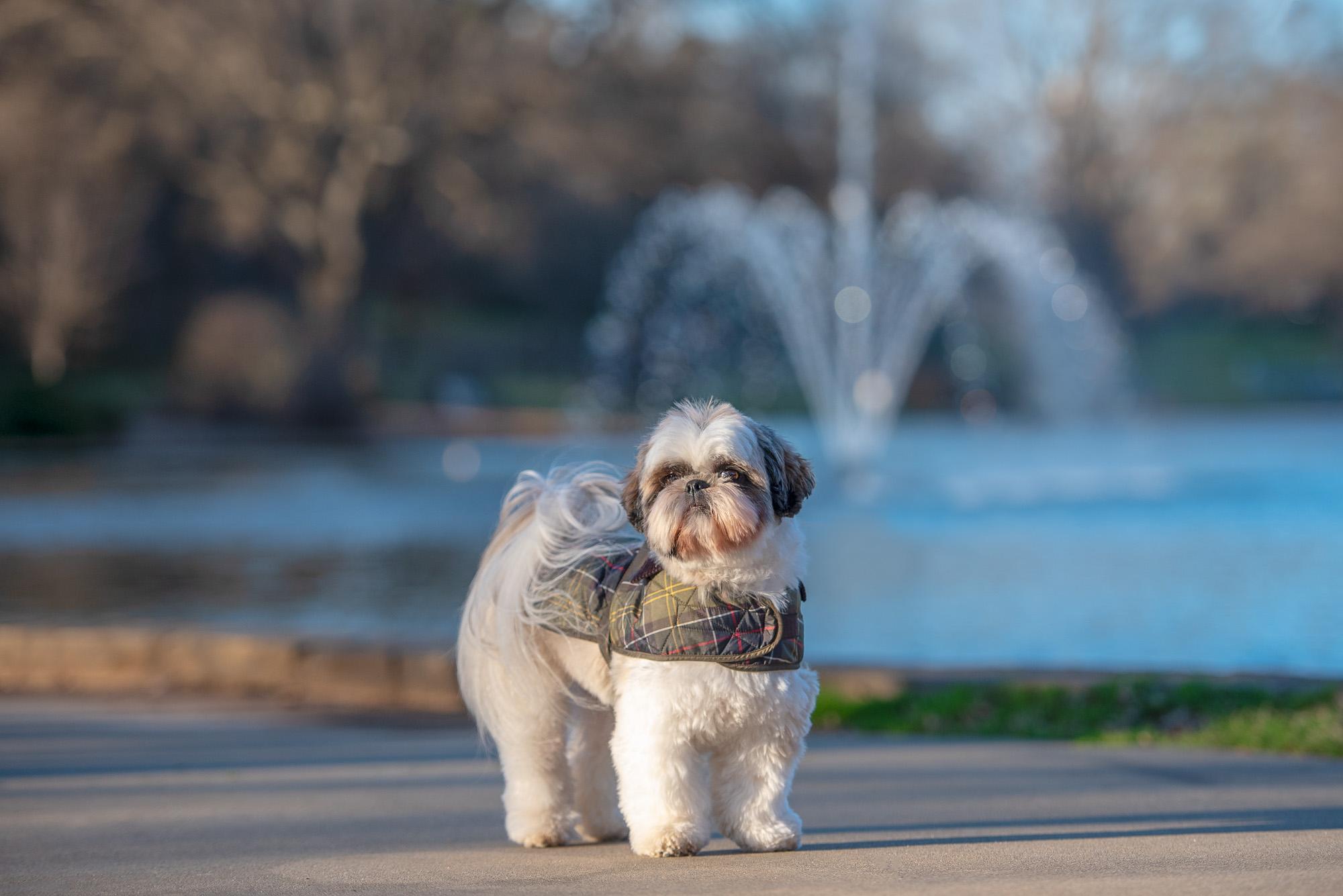 dog wearing coat Charlotte NC