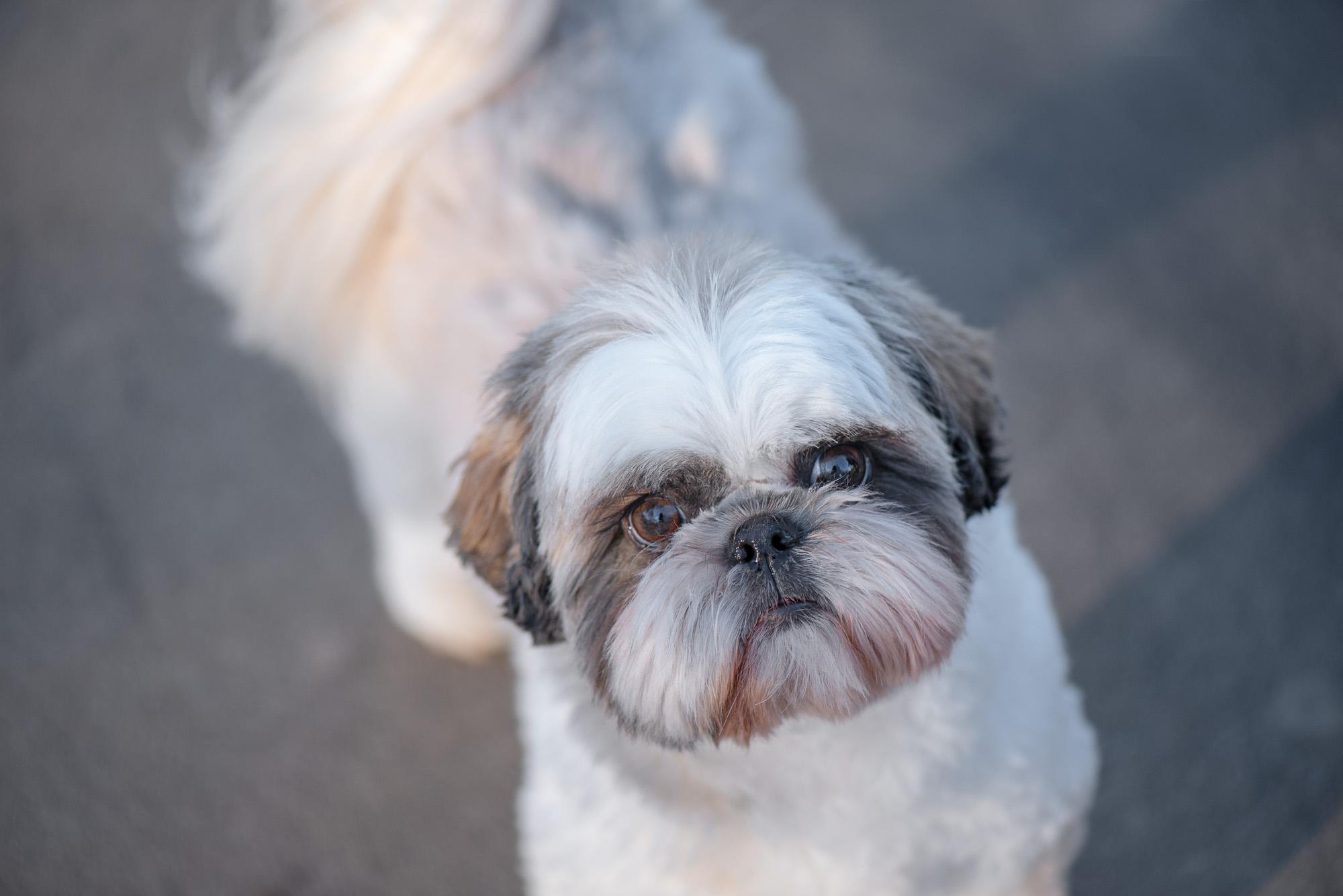 small dog photography