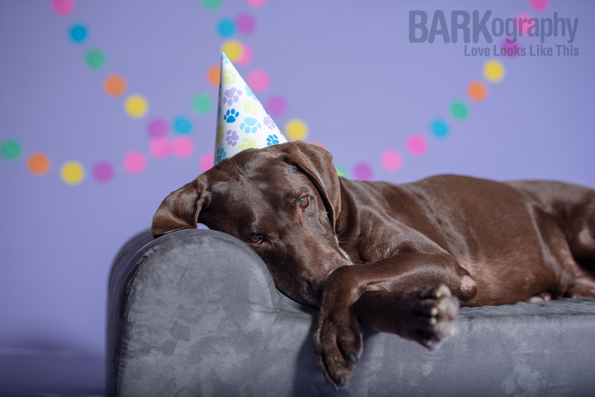 senior dog birthday party