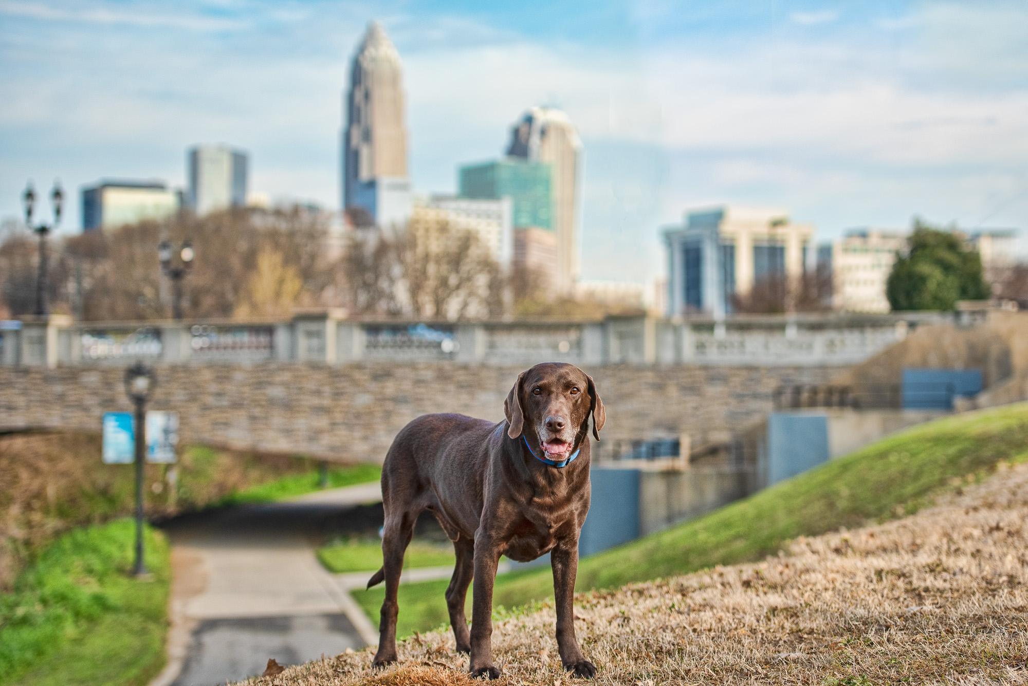 dog photo uptown Charlotte NC