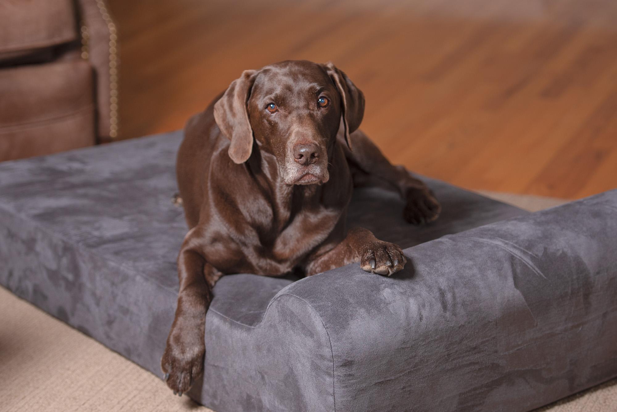 dog photo cancer donate