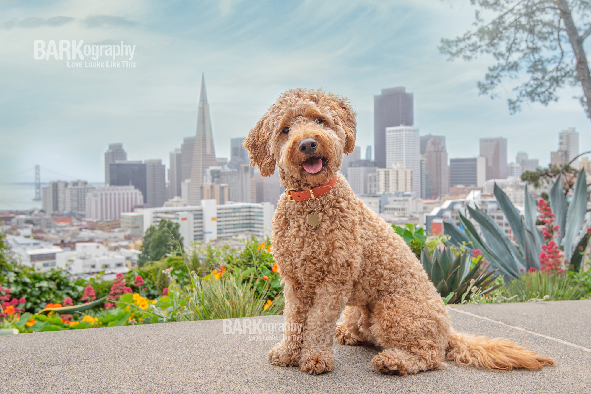 San Francisco city dog photo