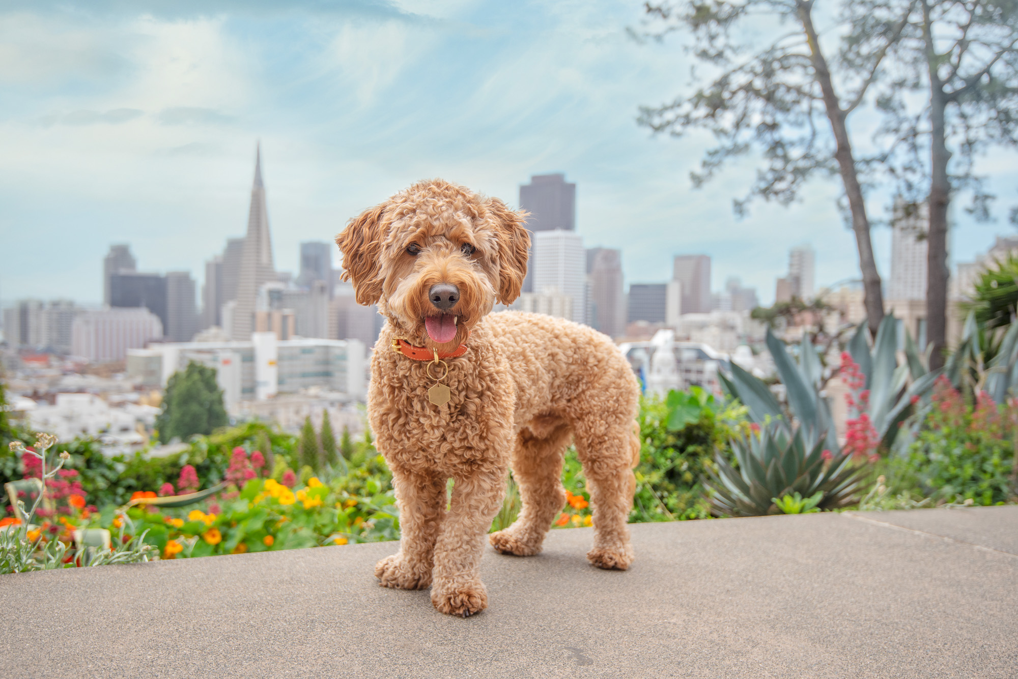 dog in San Francisco park overlooking the skyline