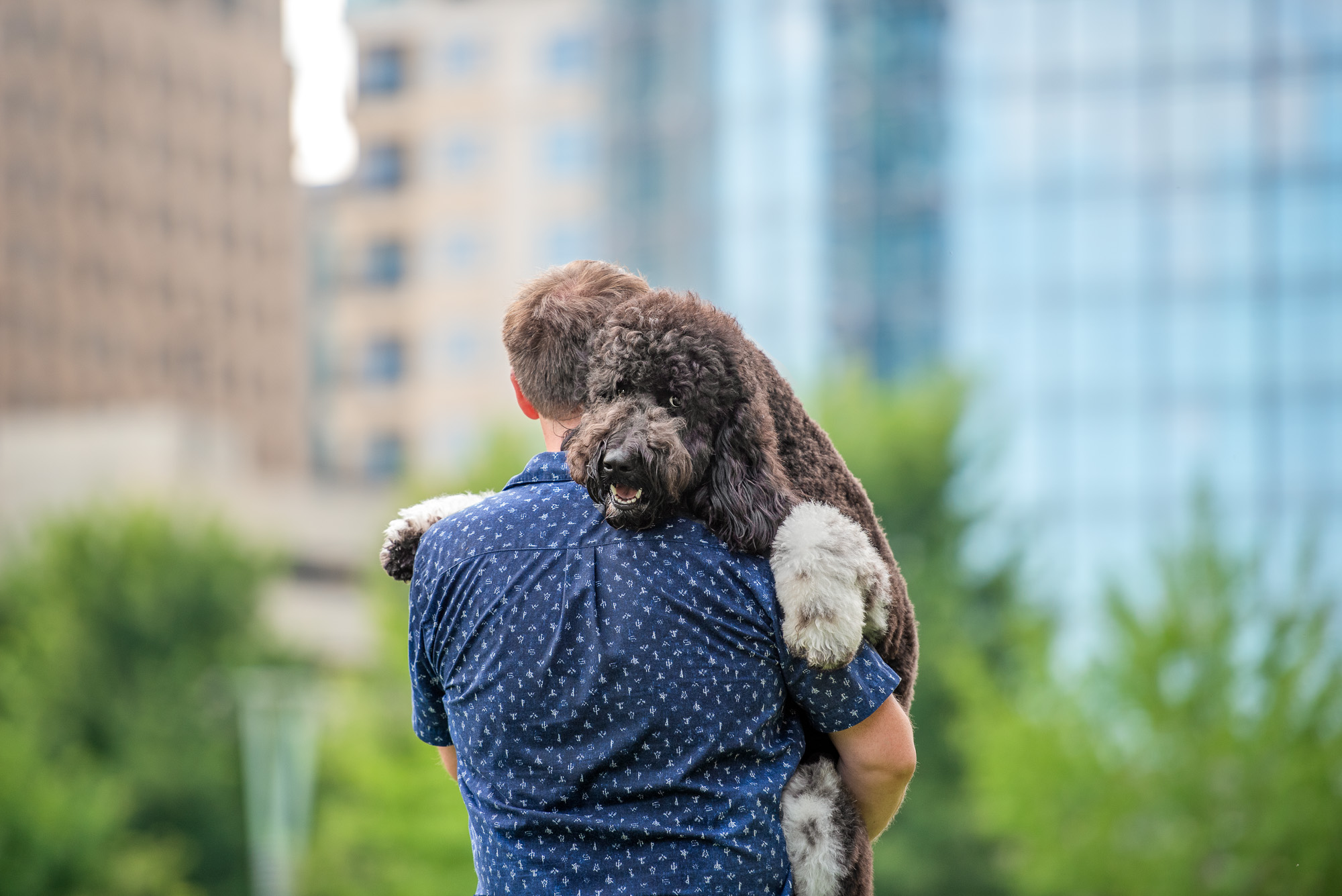 dog dad carrying large doodle Romare Bearden Park Charlotte NC