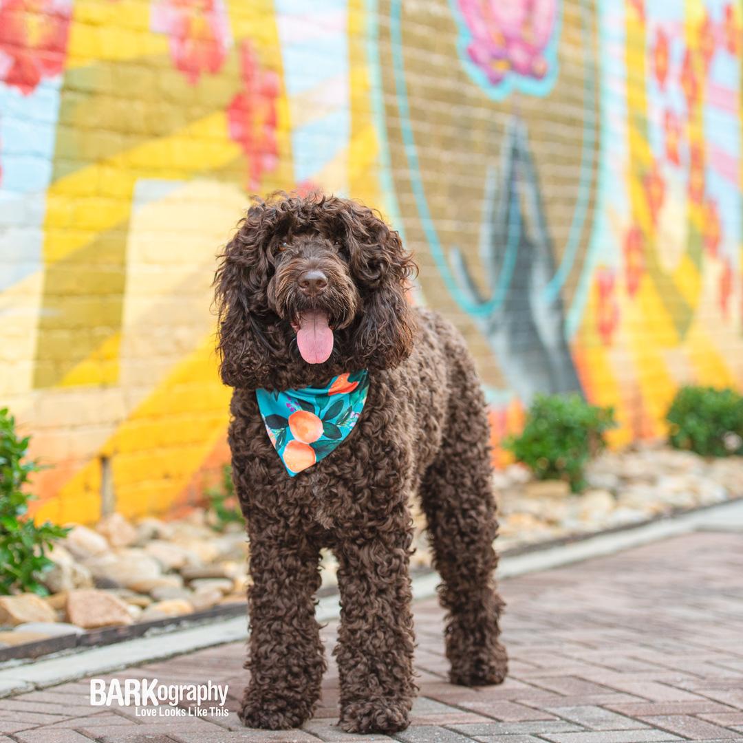 NoDa mural dog photo