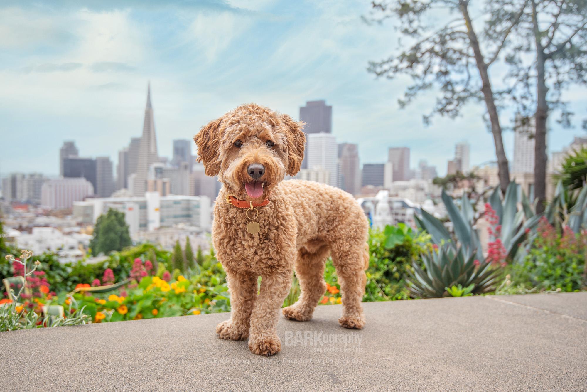 San Francisco skyline Dog Photo