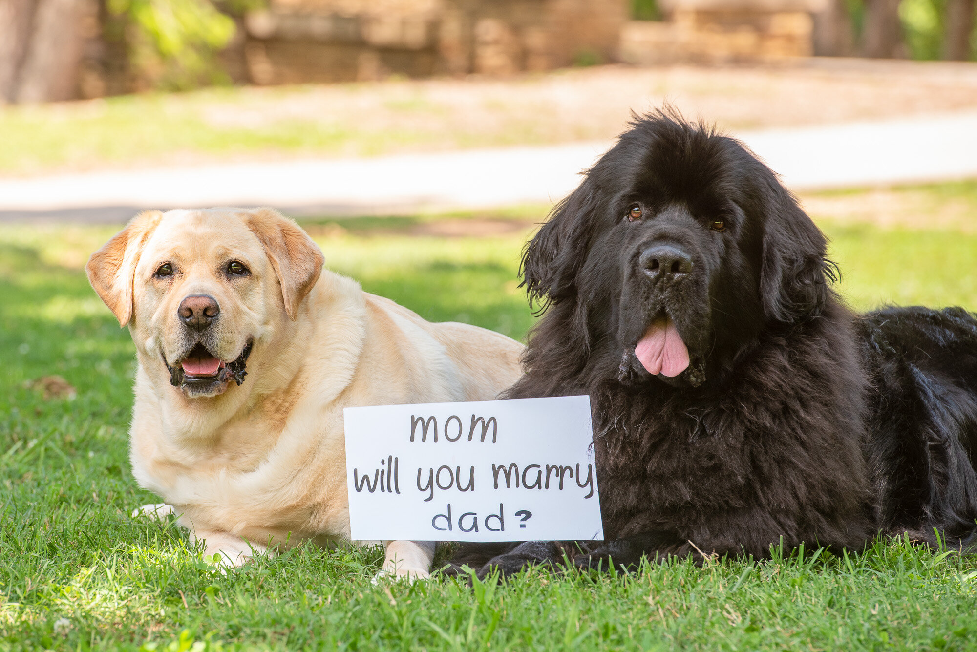 2 dogs with mom will you marry dad sign