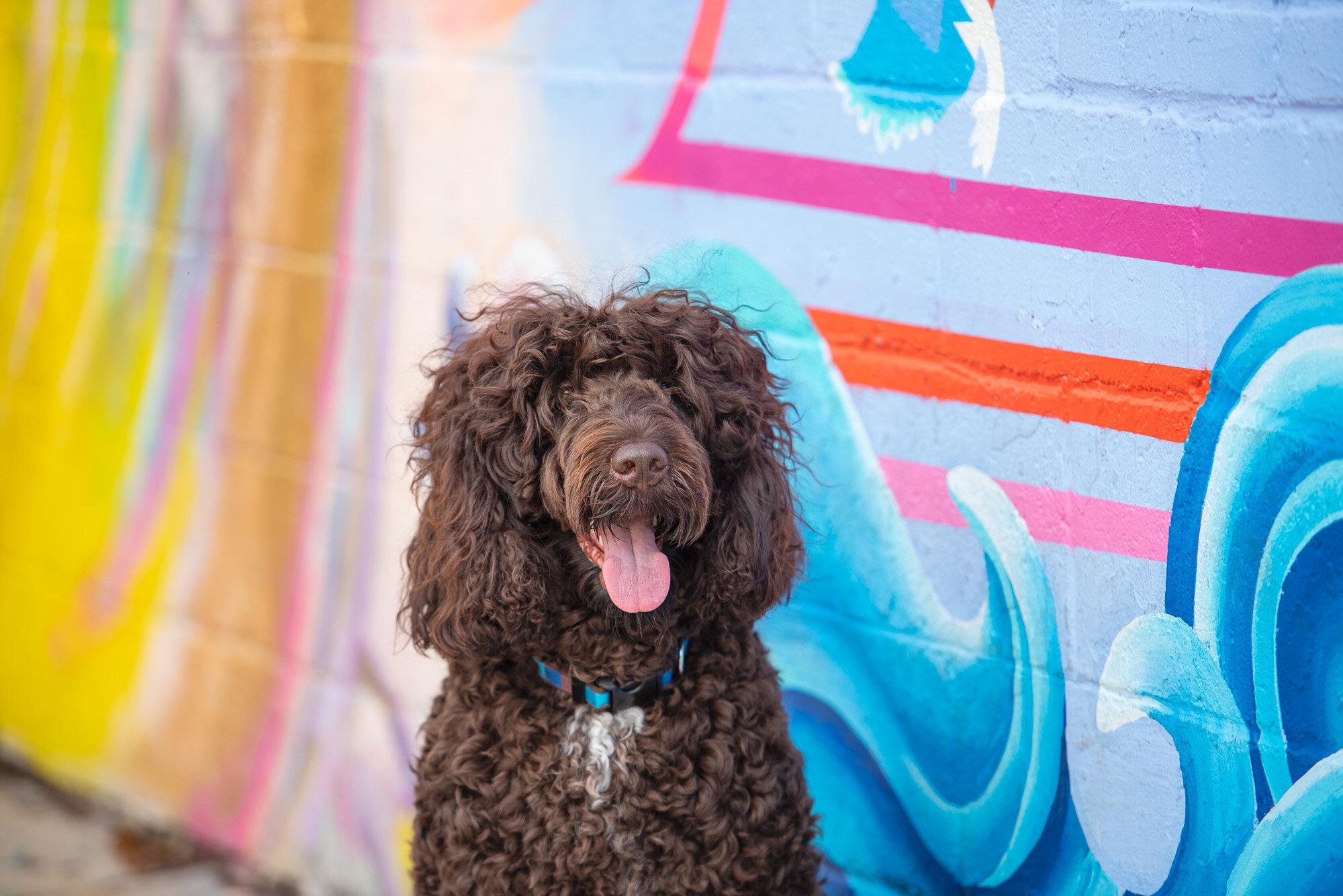 dog and mural photo NoDa Charlotte NC