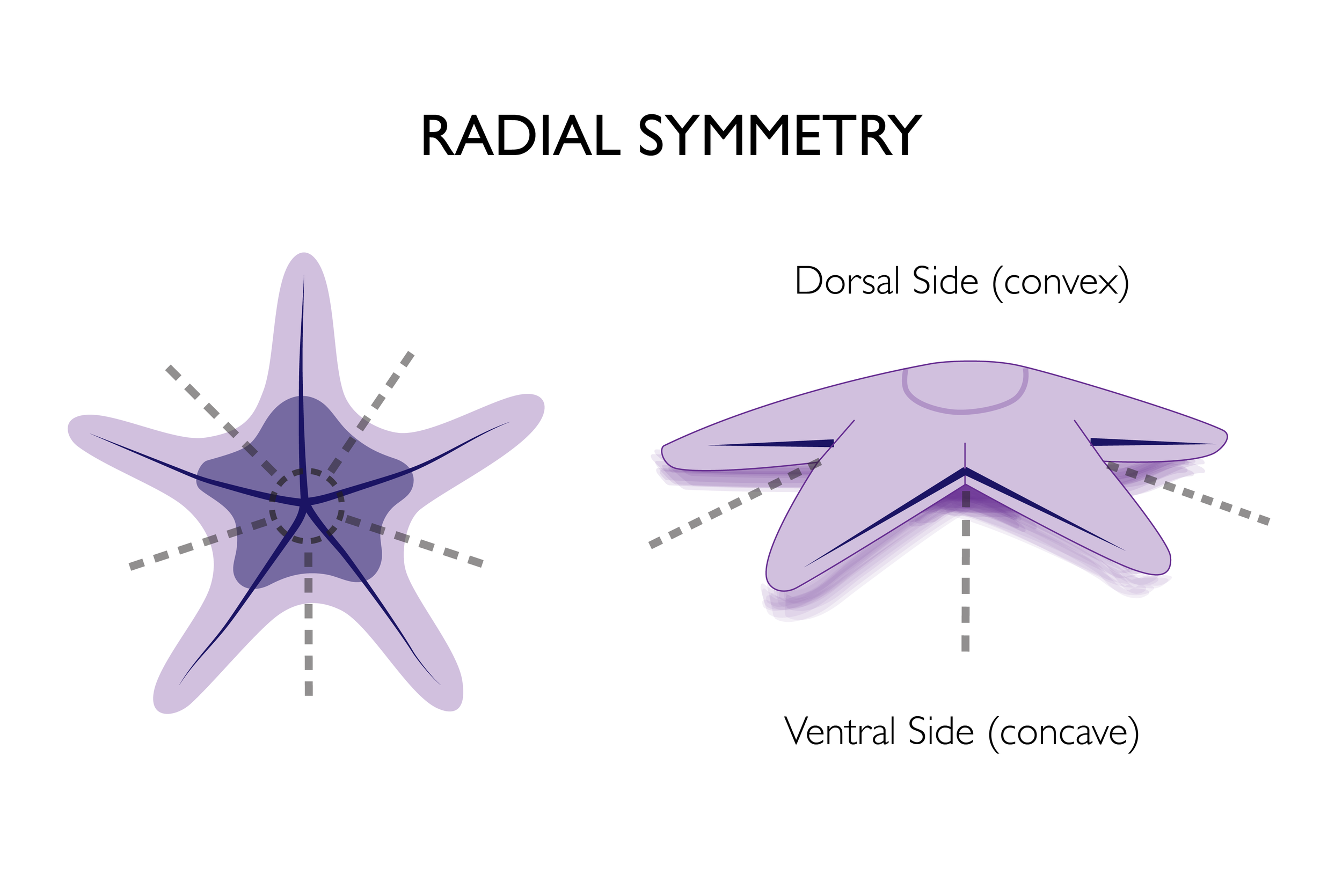 educational design symmetry-02.png