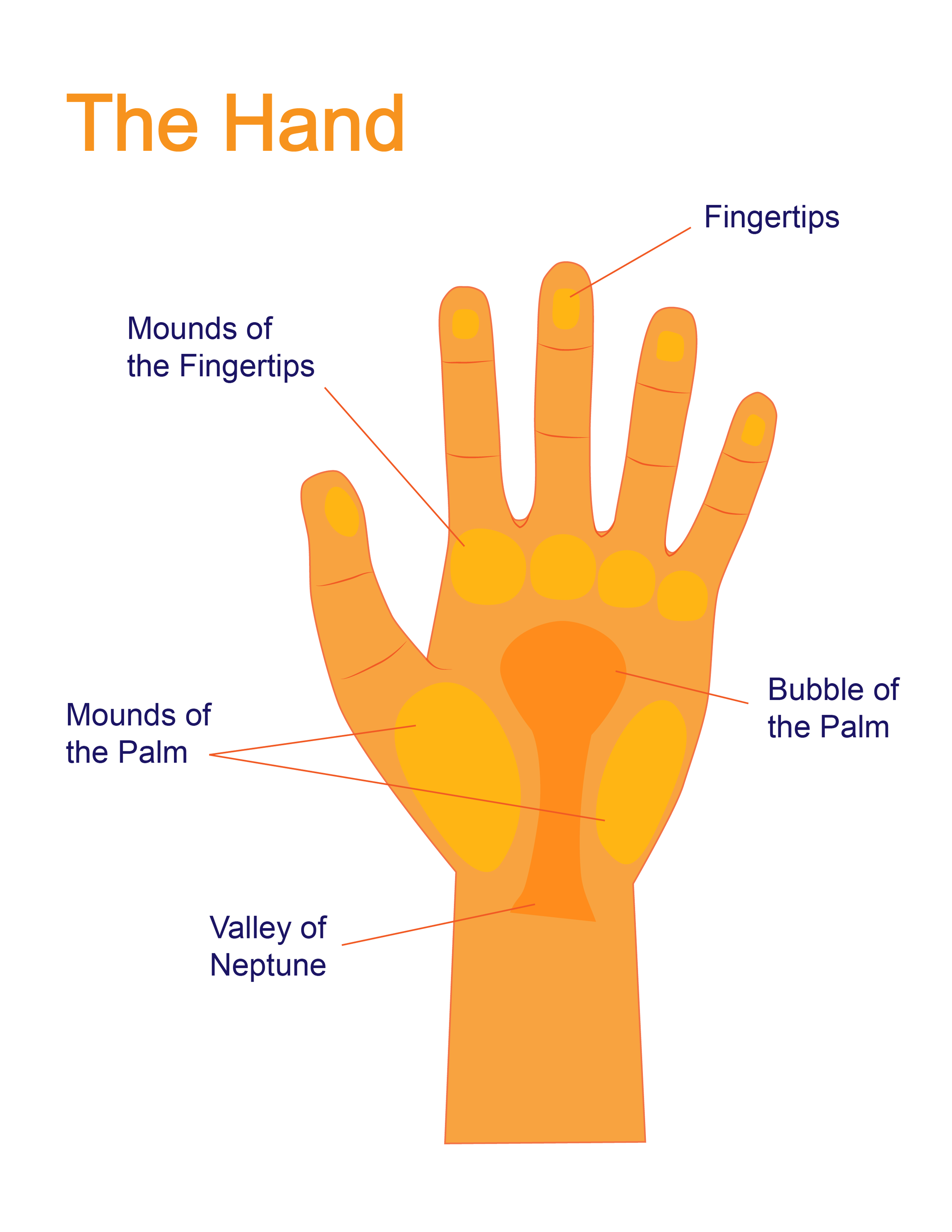 graphic design for instructional materials parts of hand.png