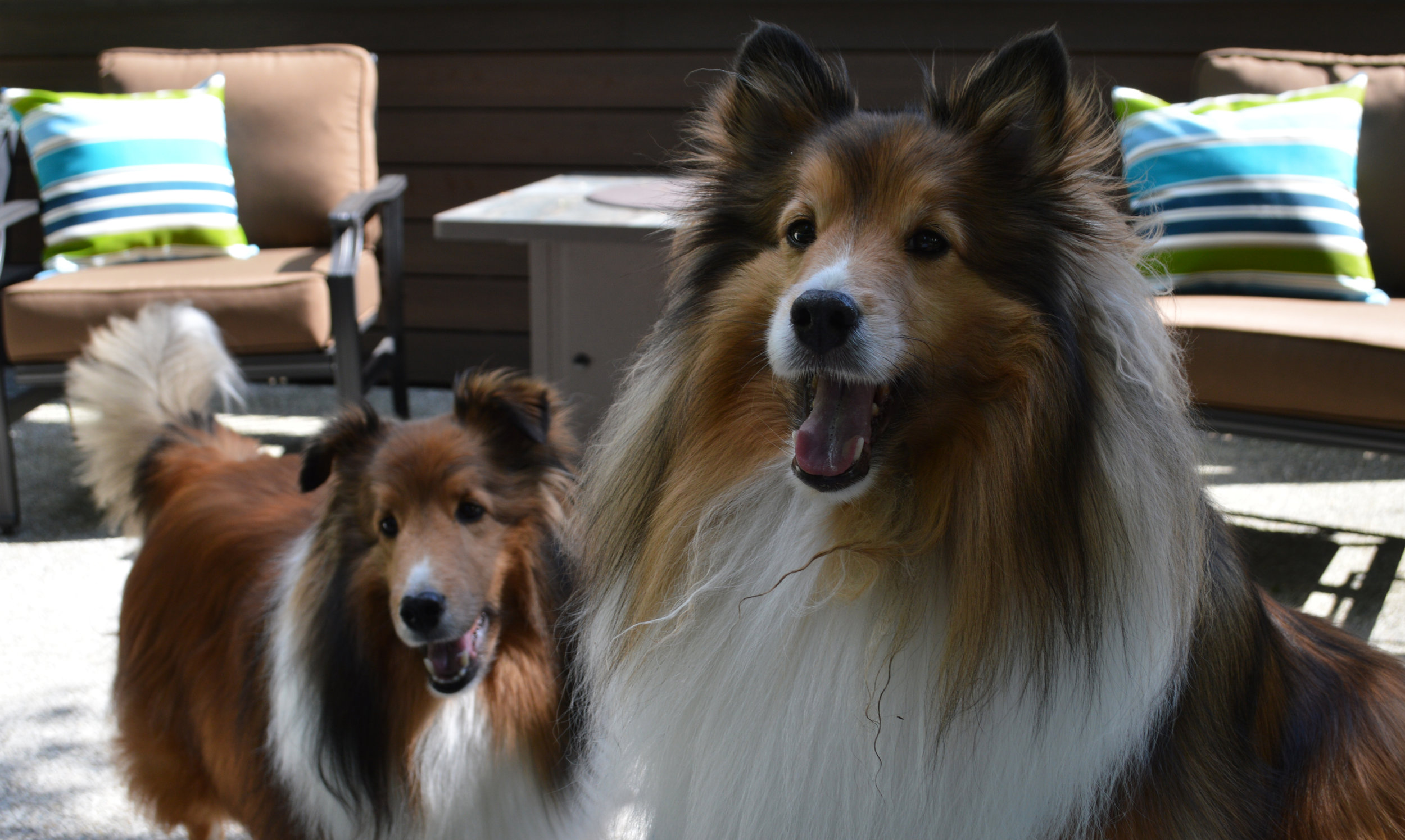 special thanks to Buddy Boo boo and Rudy toot toot . . .extra treats for being cute!