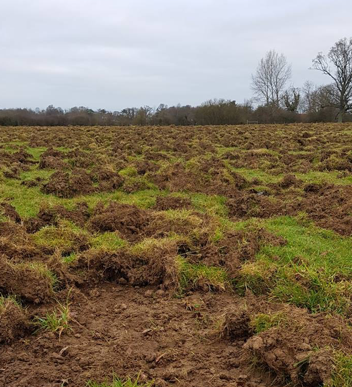 """The effects of Tamworth pig's 'rootling' at Knepp estate, which """"can initially look pretty drastic but in this small area I counted 10 lapwing, 20 redwing, 15 starling, 6 fieldfare, a pied wagtail and a green woodpecker, all feeding amongst the disturbed soil and tussocks."""" - Quote from Charlie Burrell of Knepp estate."""