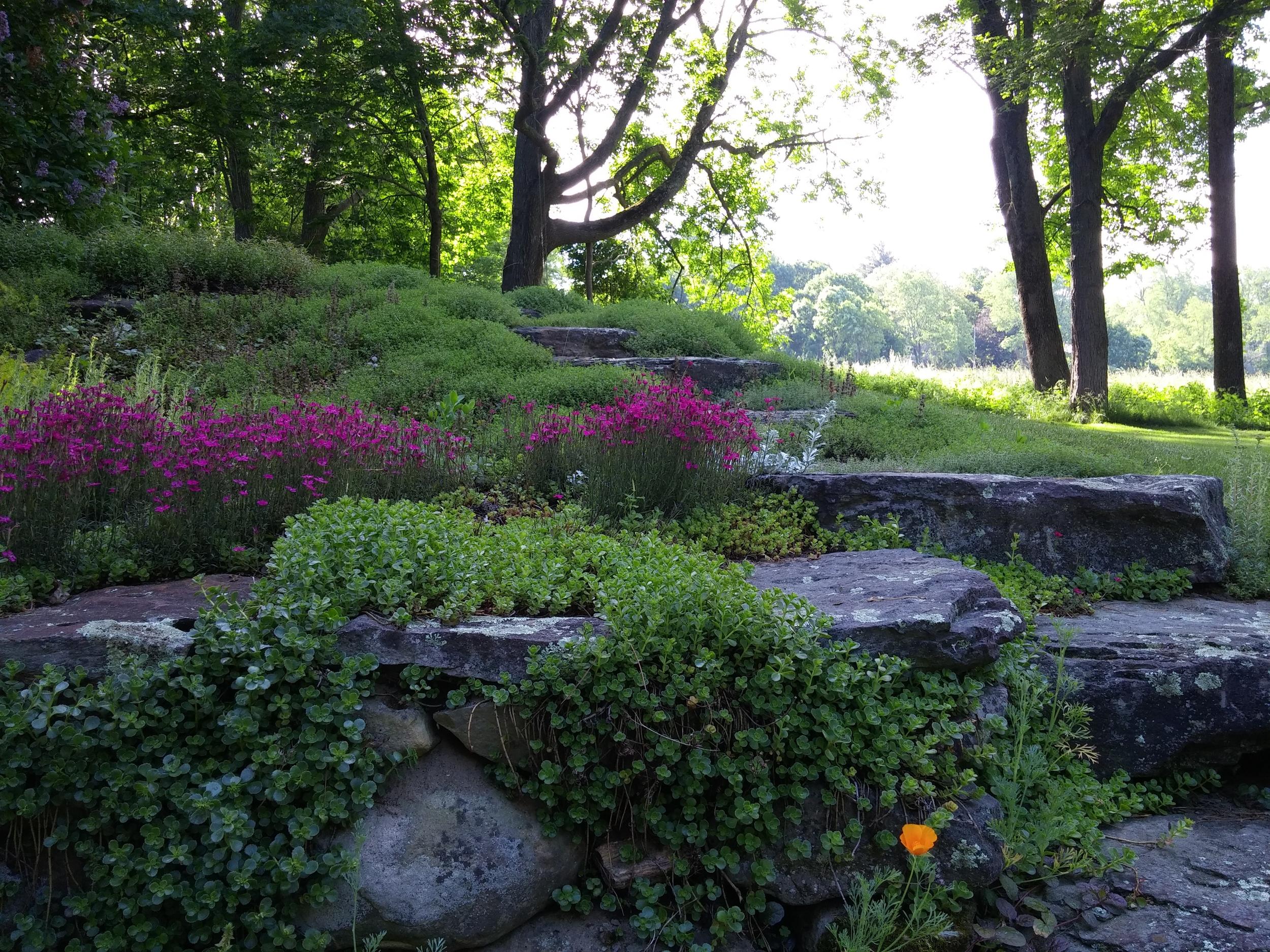 Tributes Fiddlehead Landscape Design