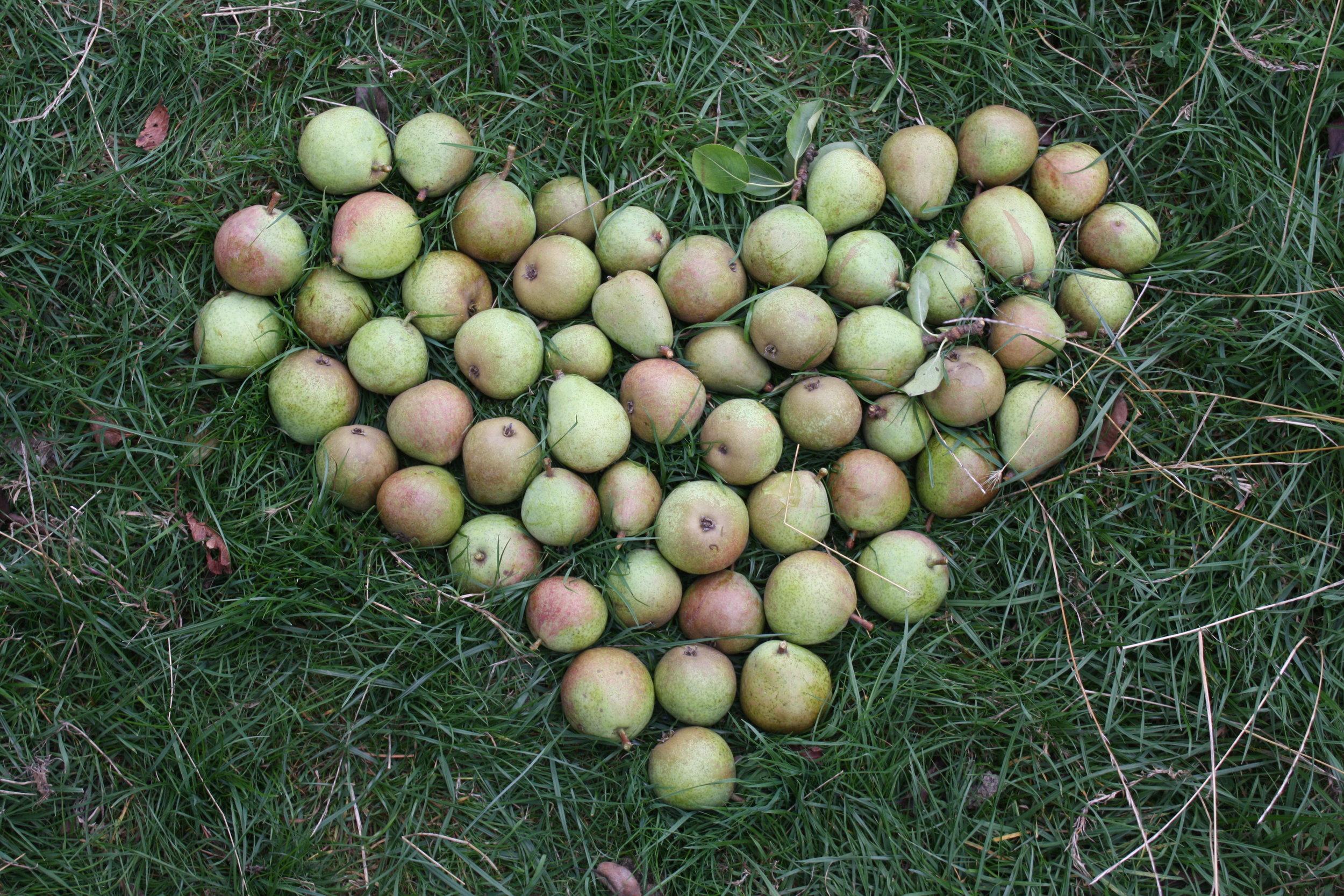 love pears.JPG