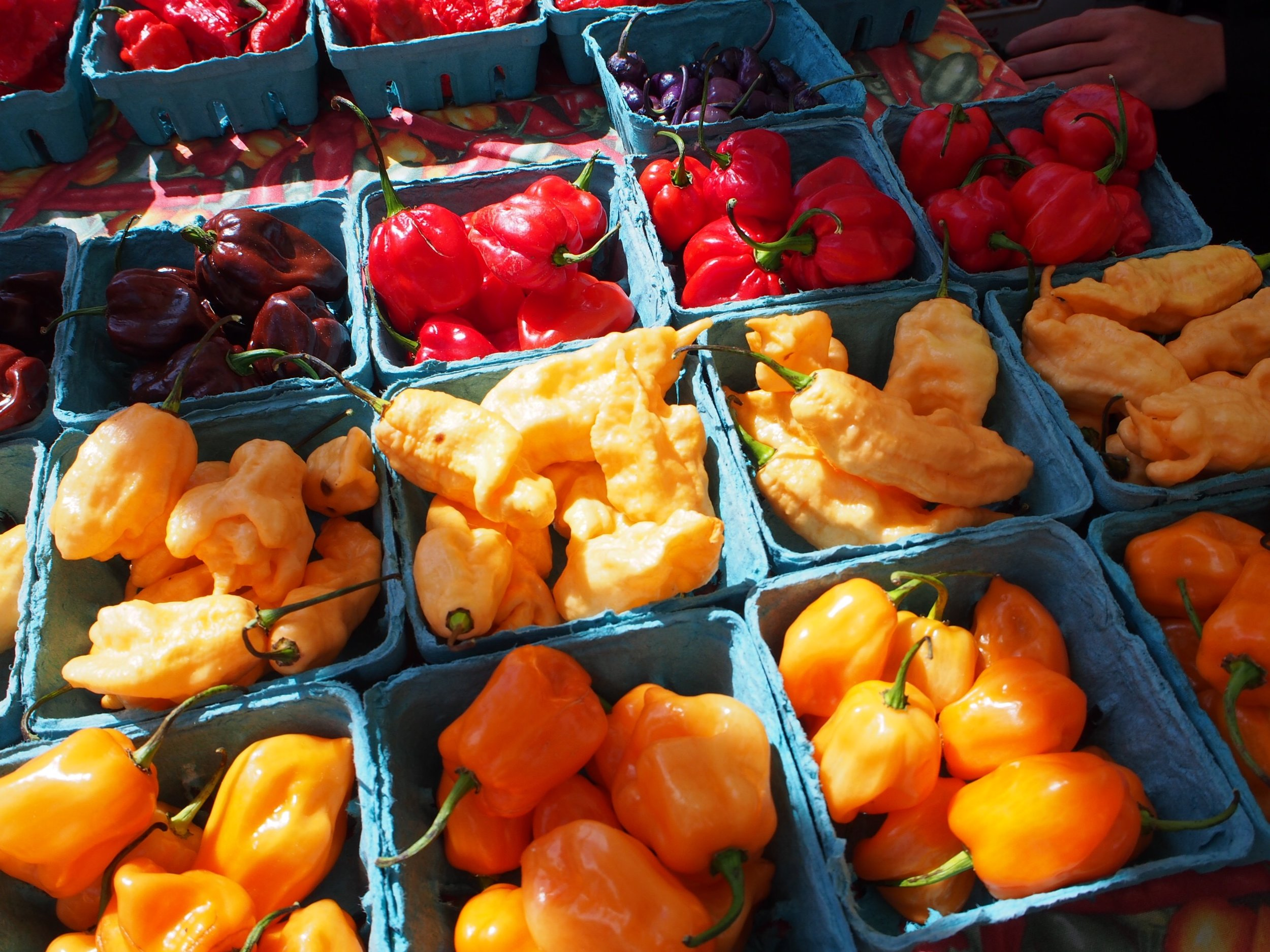 Colorful assortment of peppers