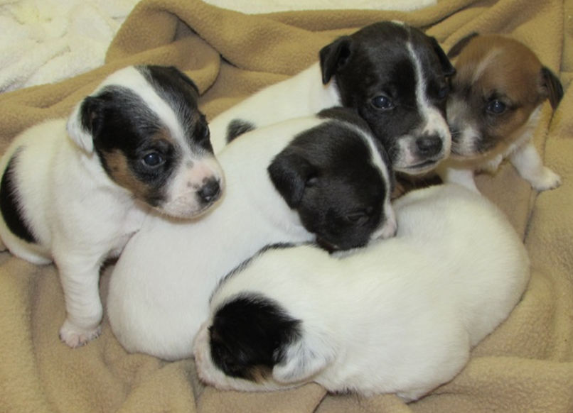 Our litter from April 2014