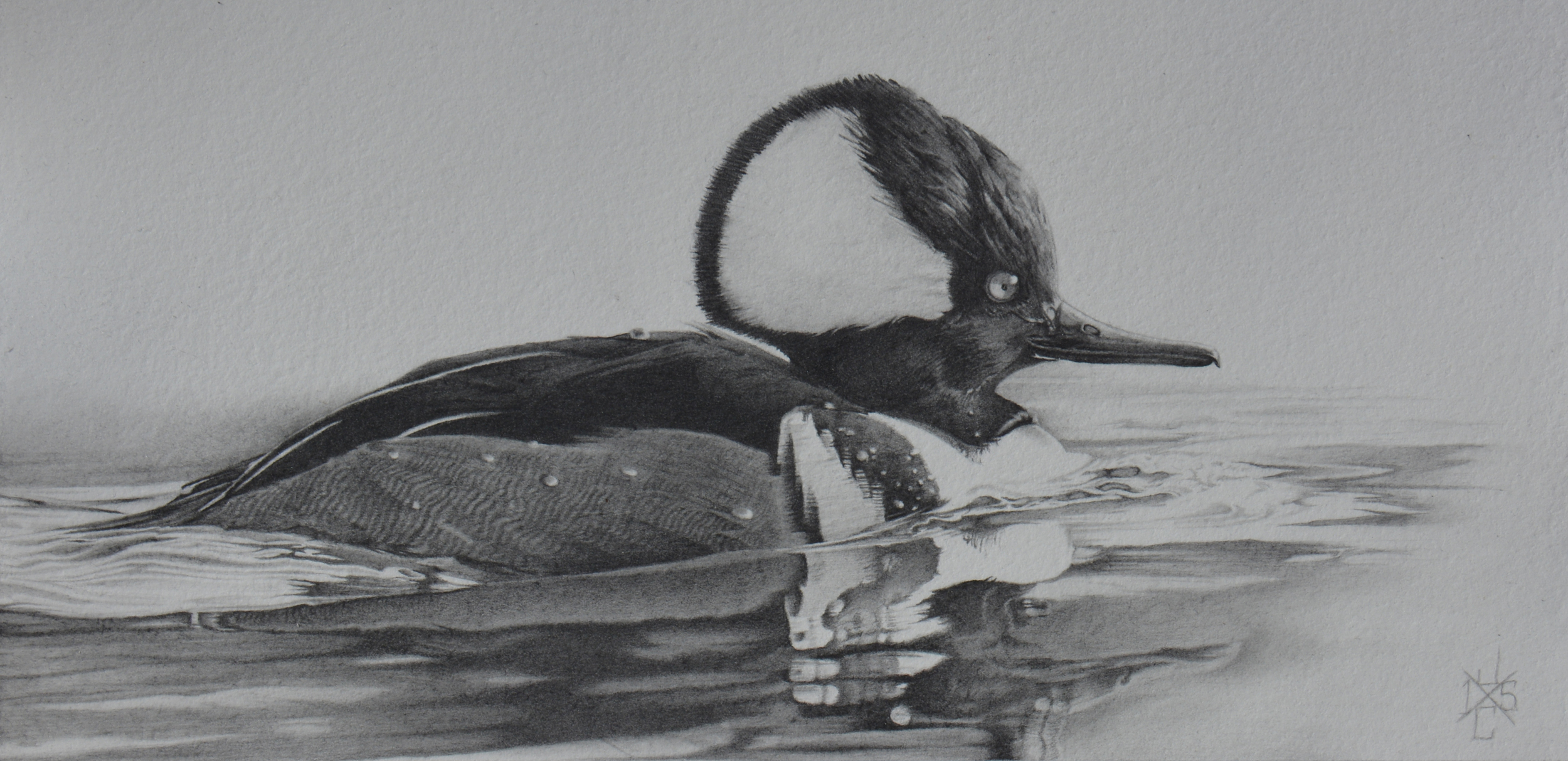 Hooded Merganser #1