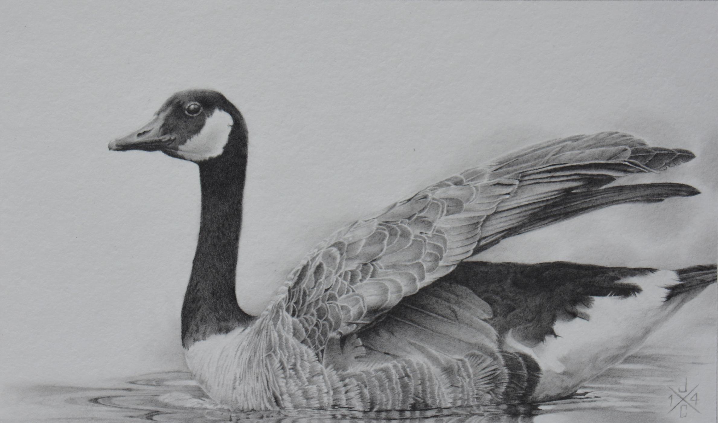 Canada Goose #1