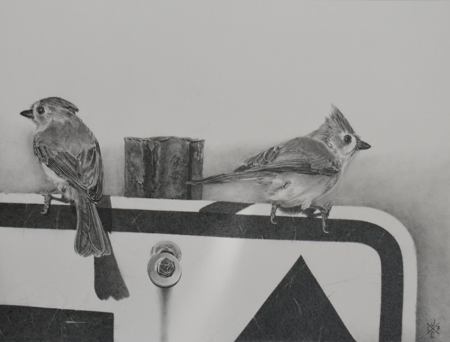 Tufted Titmice #1