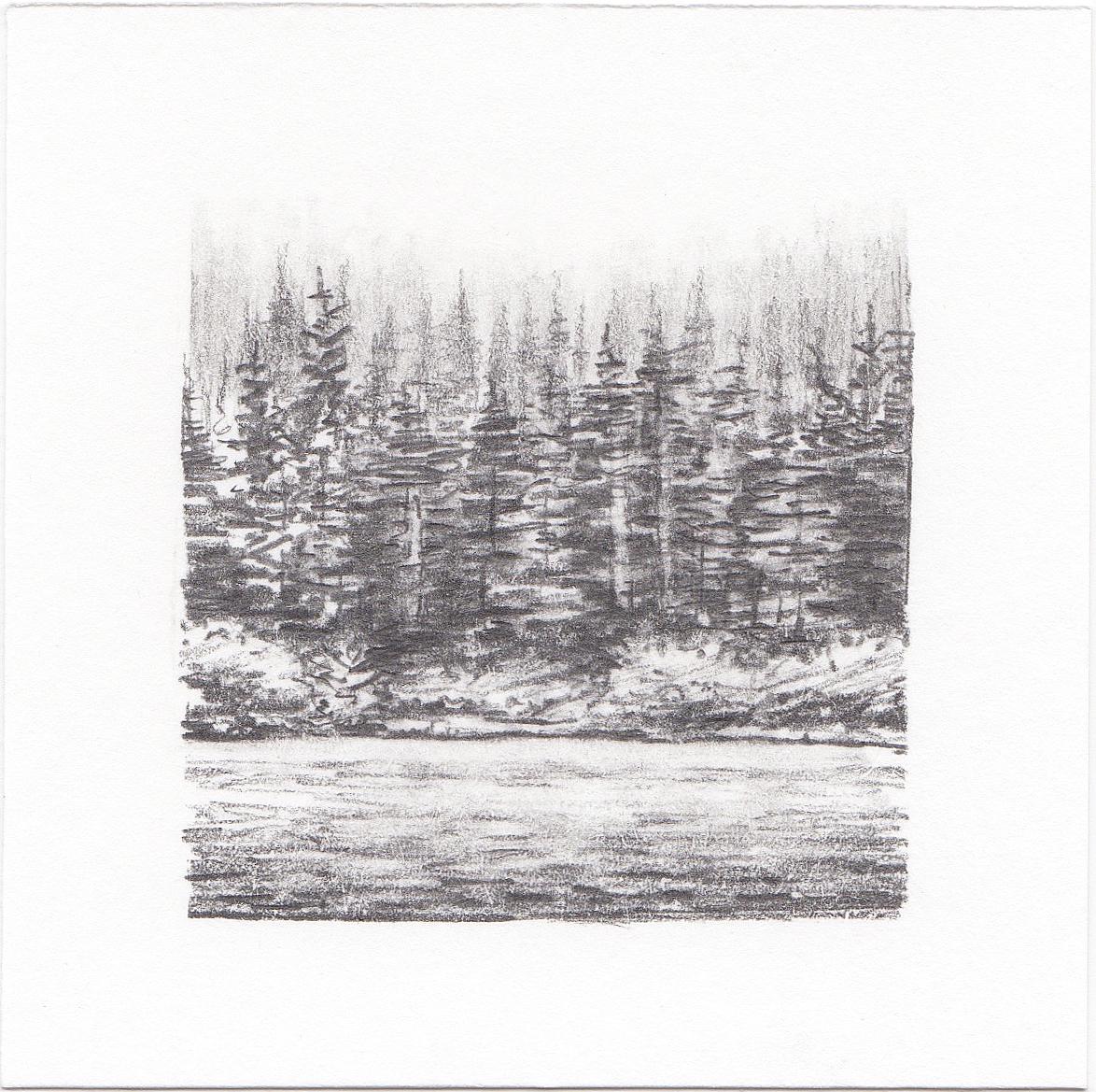 #44 Woods outside Portland, Oregon | 3x3 | graphite