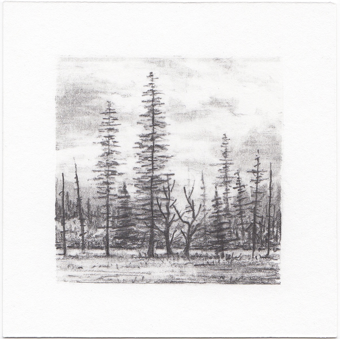 #65 Yosemite National Park, California | 3x3 | graphite