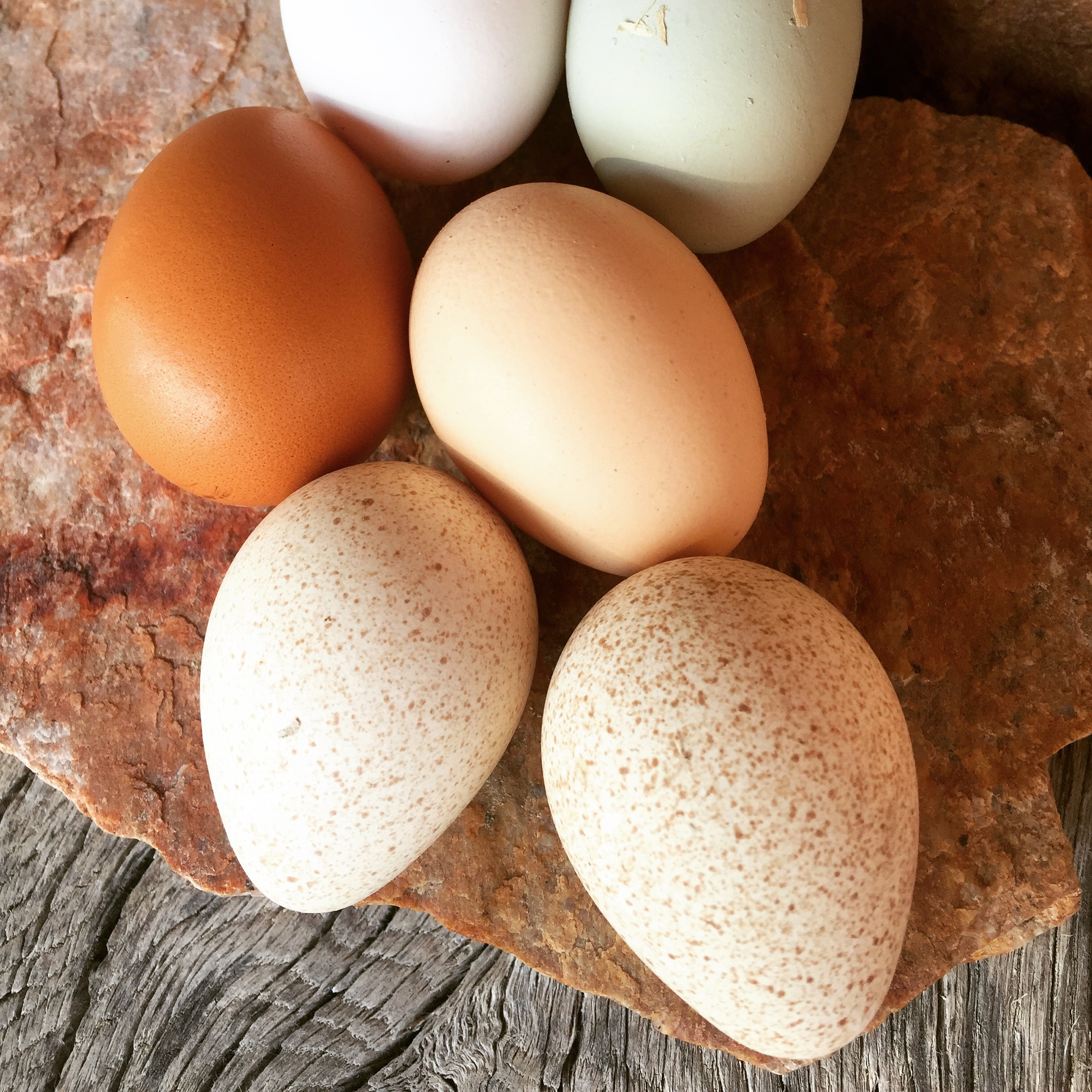 The two speckled eggs are from Mama Turkey.